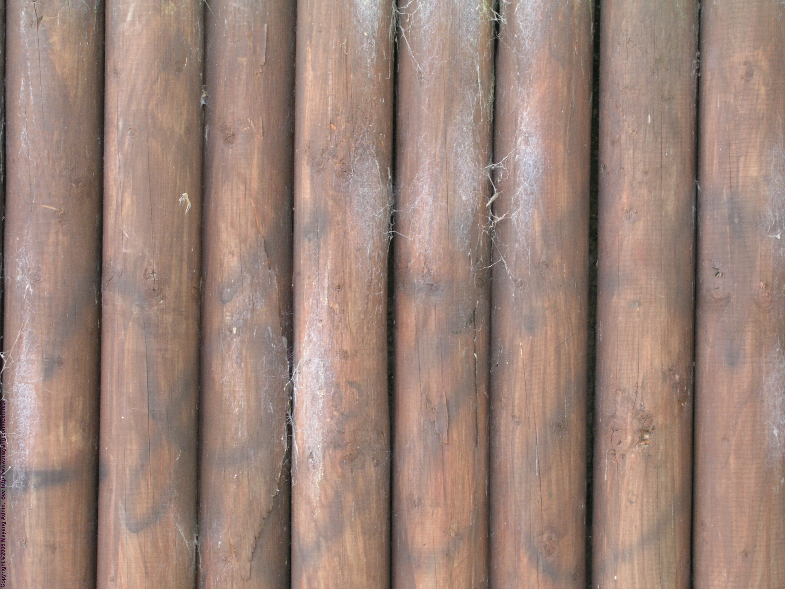 wooden texture tree wood, download photo, background, texture