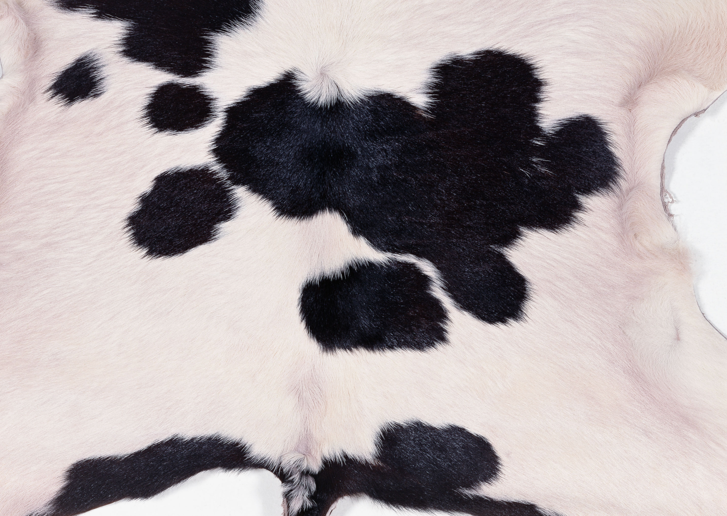 animal cow texture, background