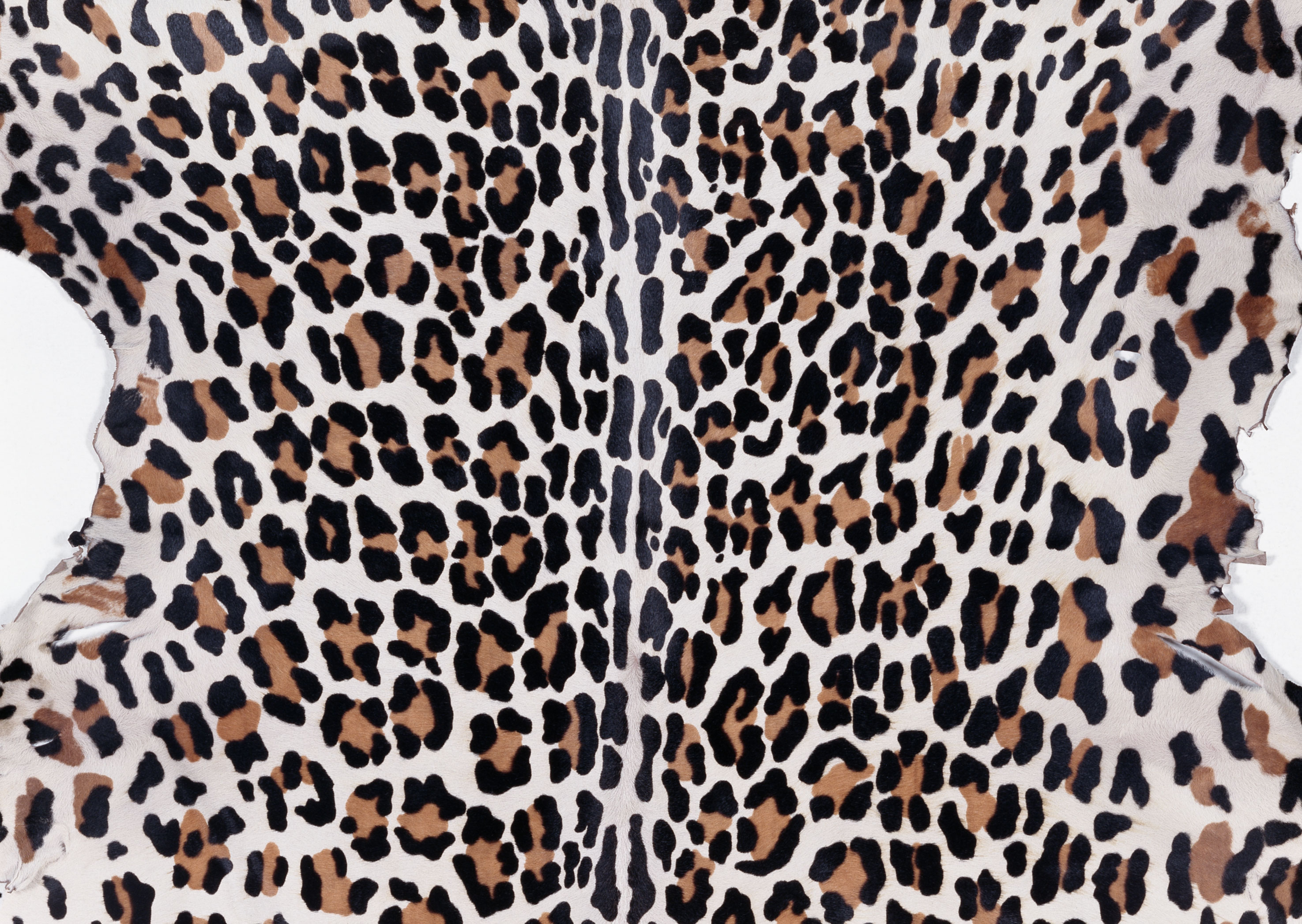 animal leopard skin texture, background