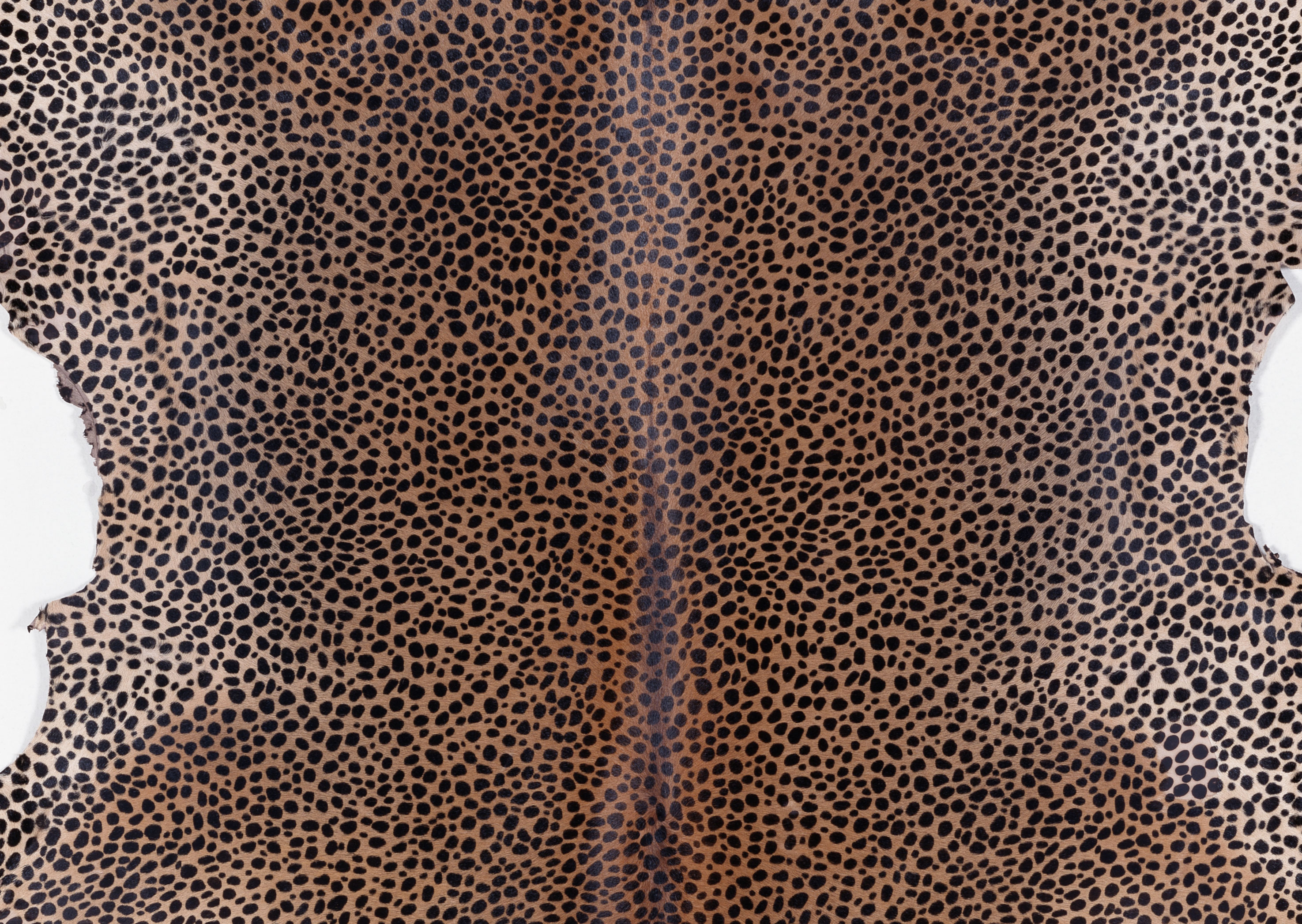 animal texture, background, skin animal texture, background