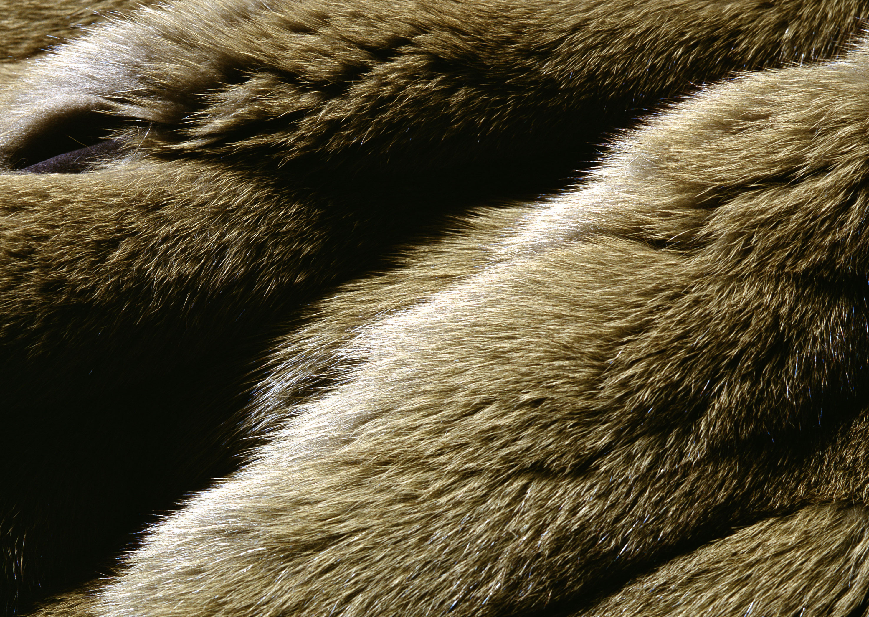 wolf skin texture, background