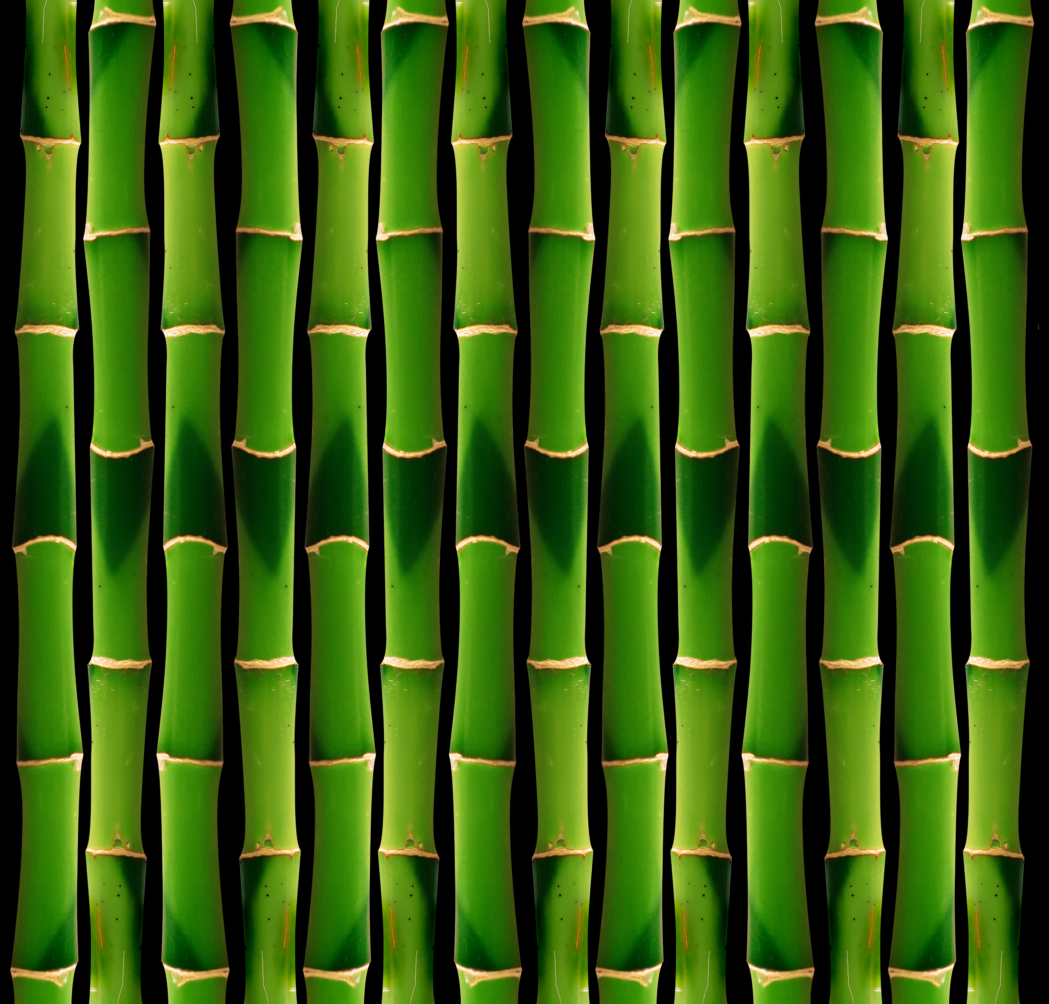green bamboo, Texture bamboo, green bamboo texture, photo, background