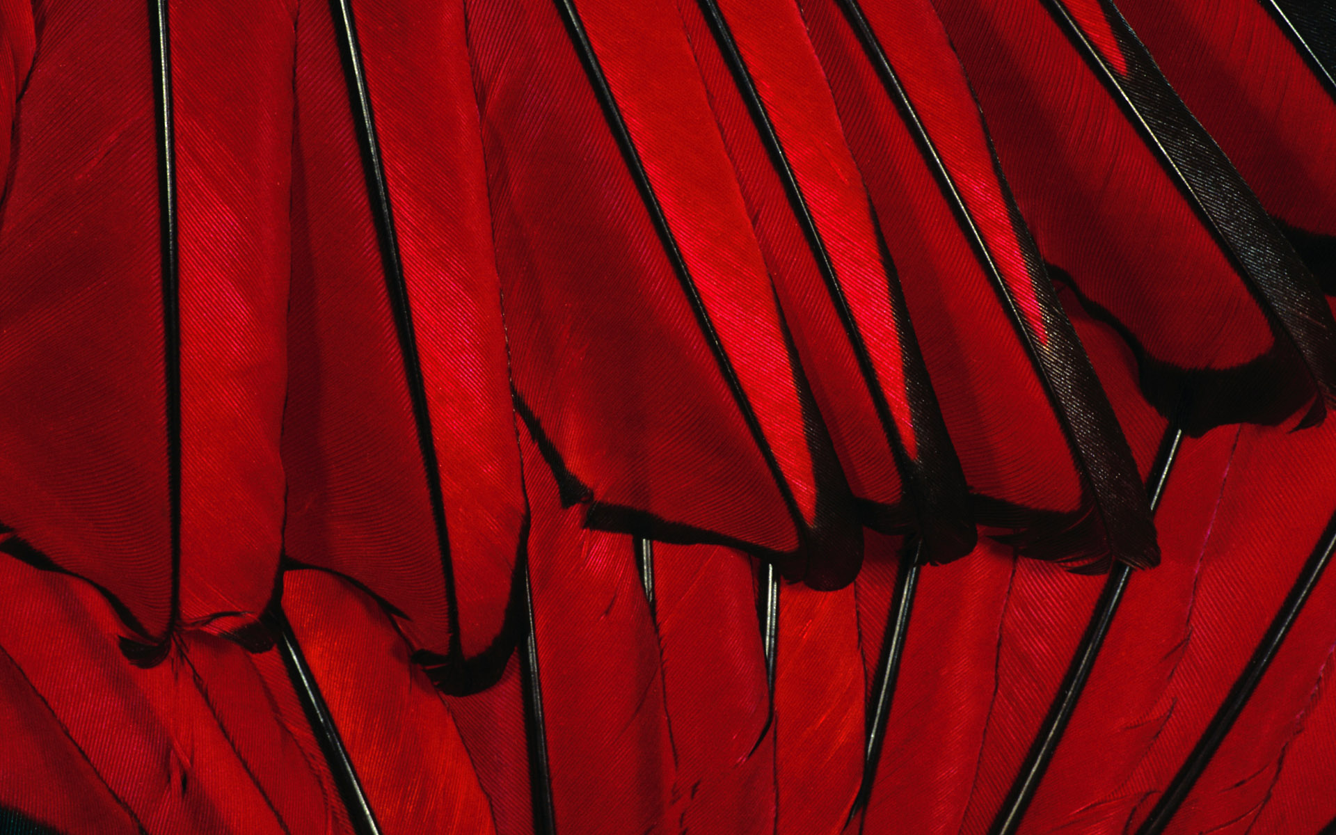 red feather texture, download photo, background, red , , texture
