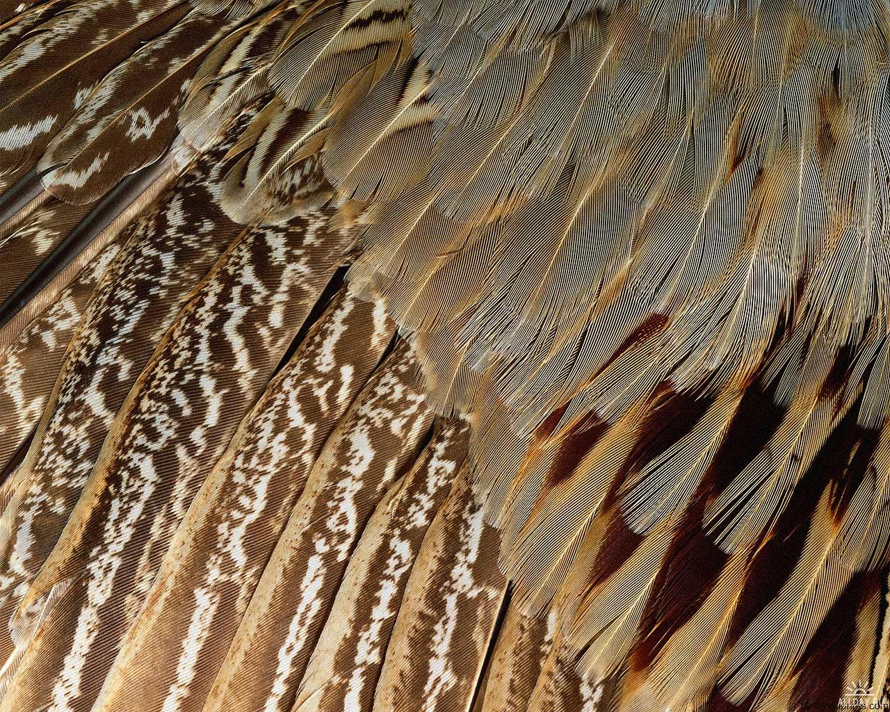 , texture feather, download background, photo, image, feather background texture