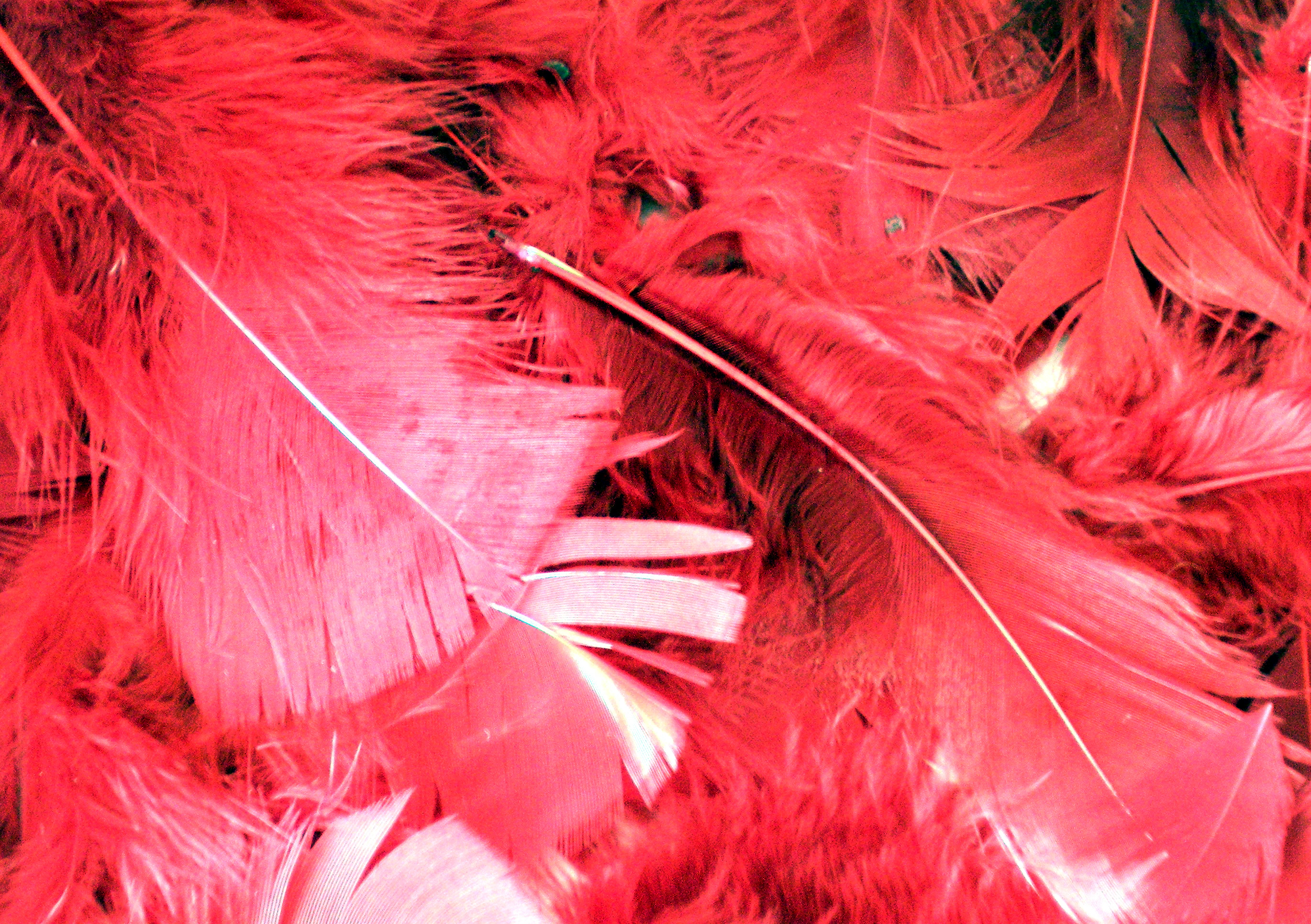 , , texture feather, download background, photo, image, pink flamingo feathre background texture