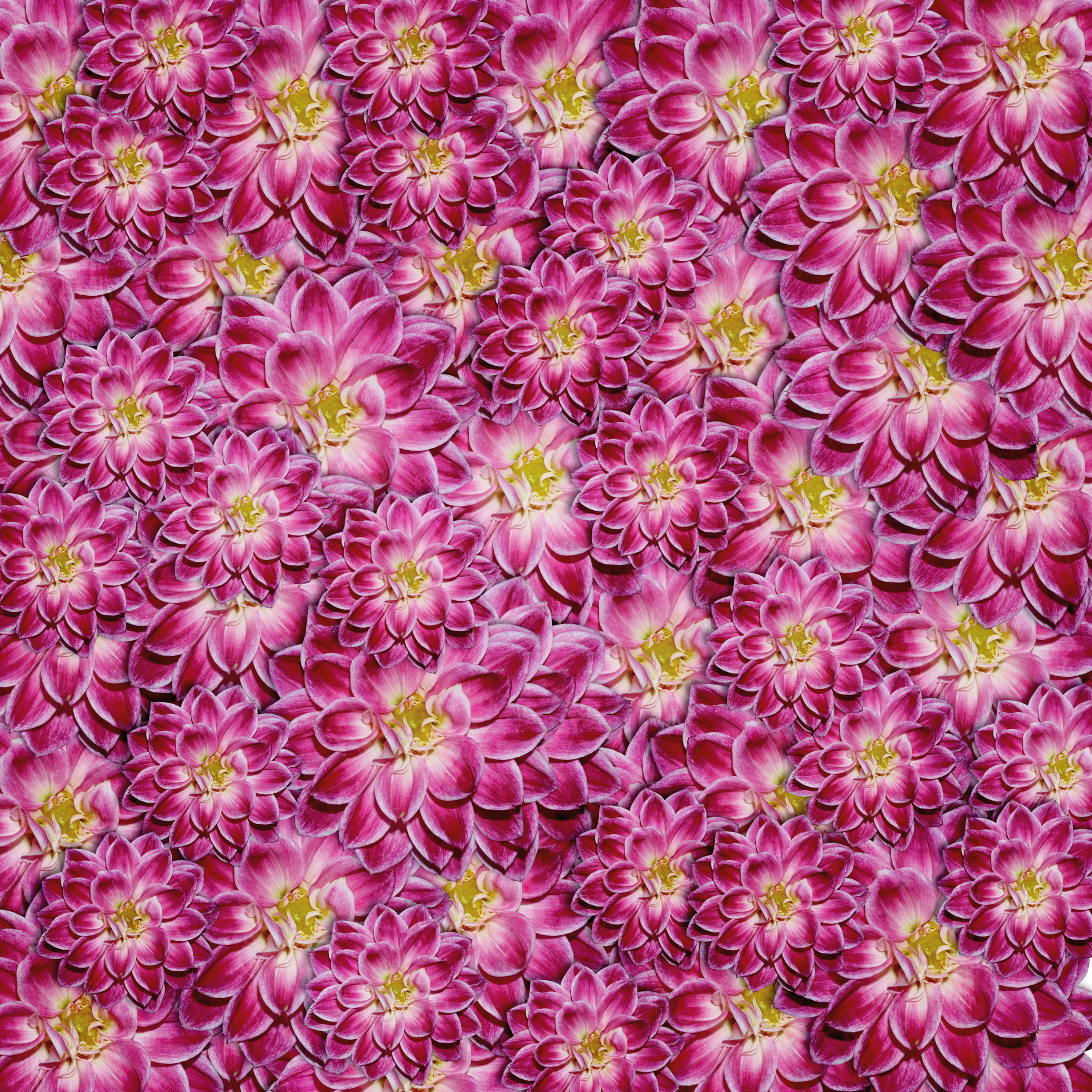 texture, flowers, flower background, flower texture
