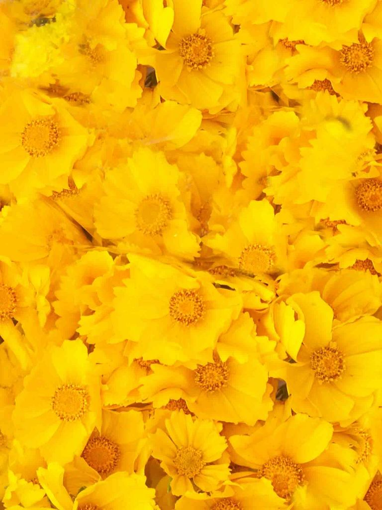 Yellow Flowers Texture Flowers Flower Background Flower Texture