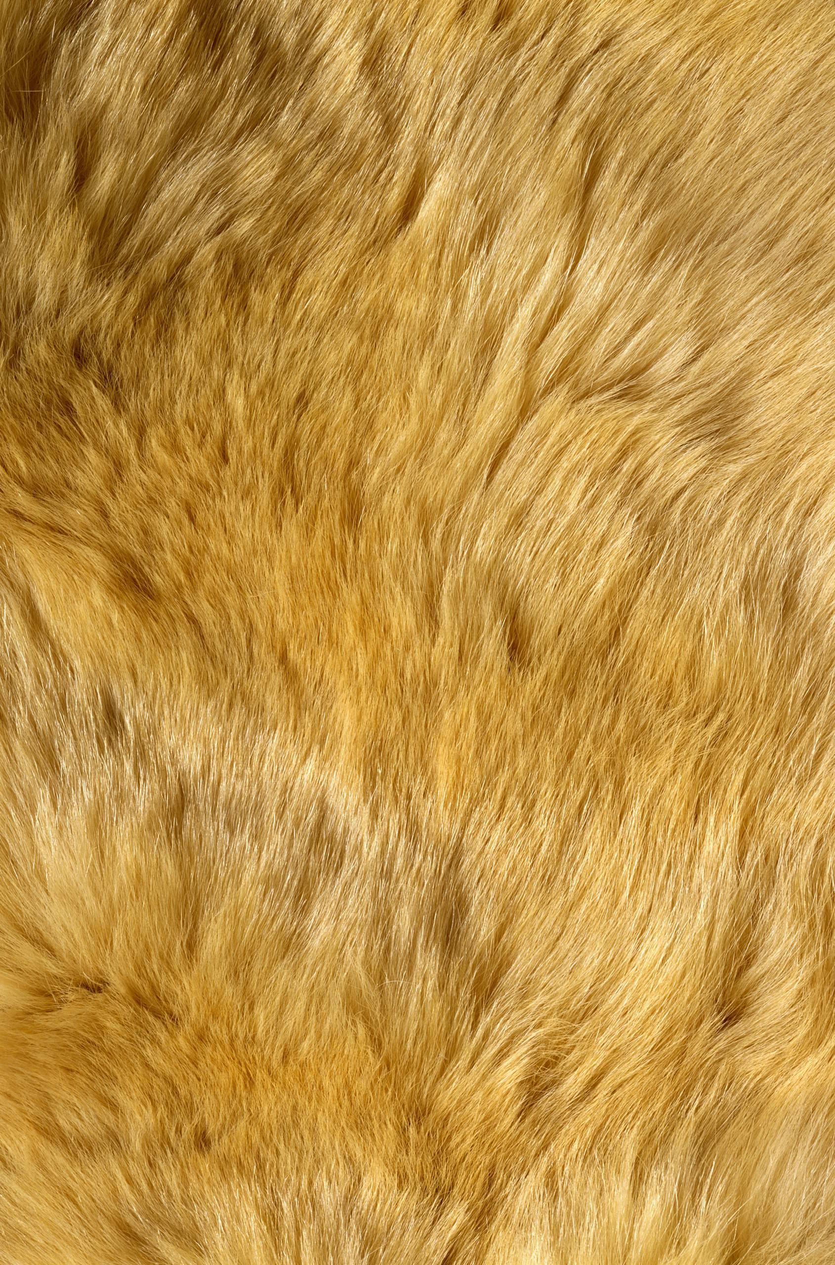 , texture fur, yellow fur texture background, background