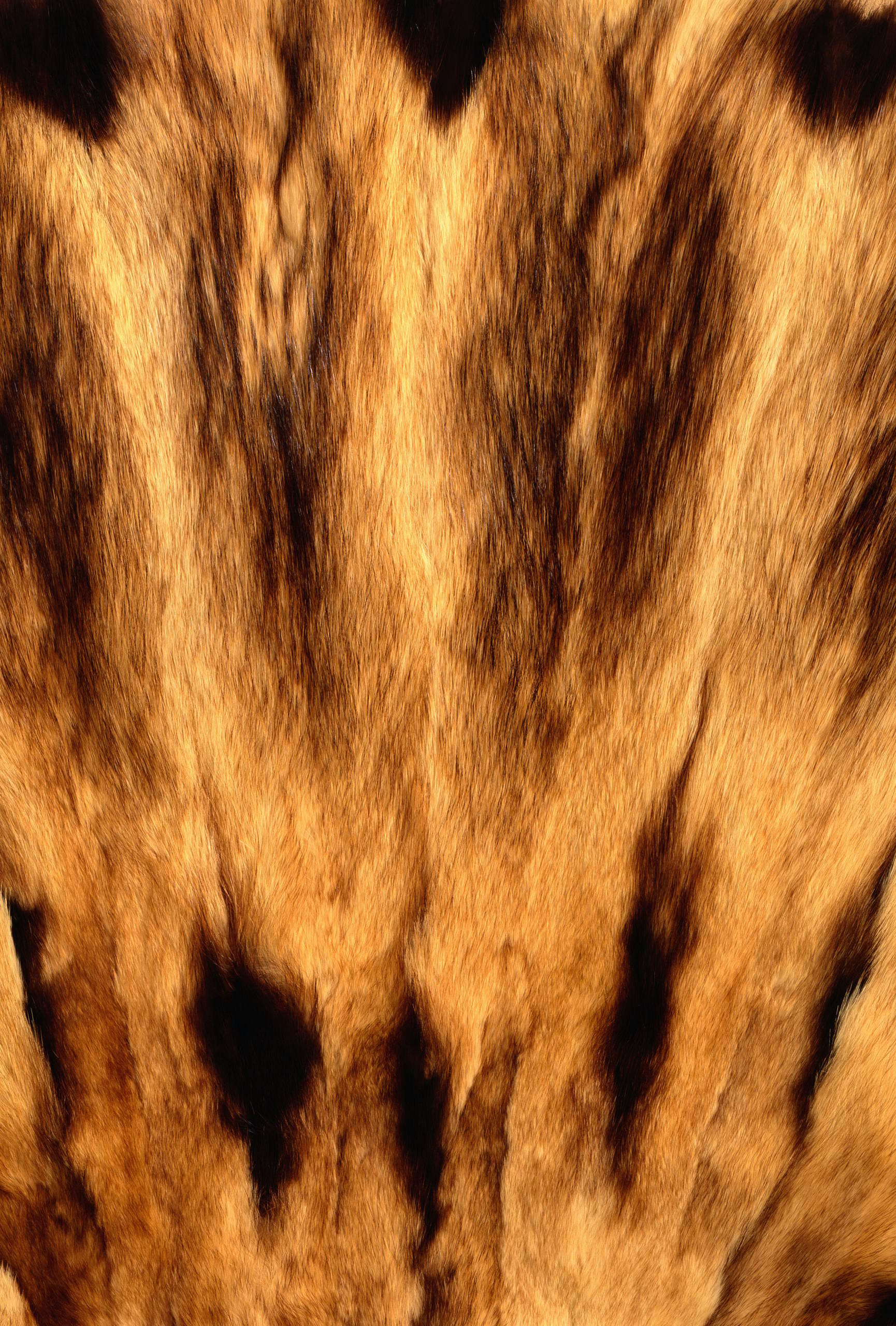 , texture fur, fur texture background, background