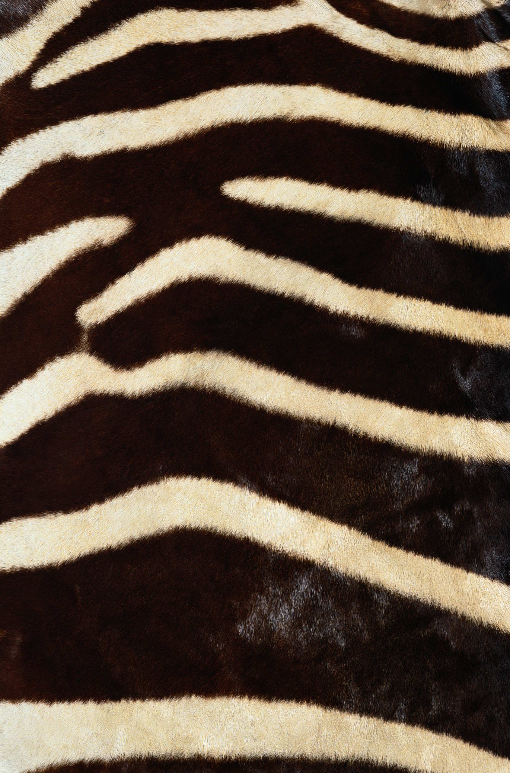 , texture fur, zebra fur texture background, background