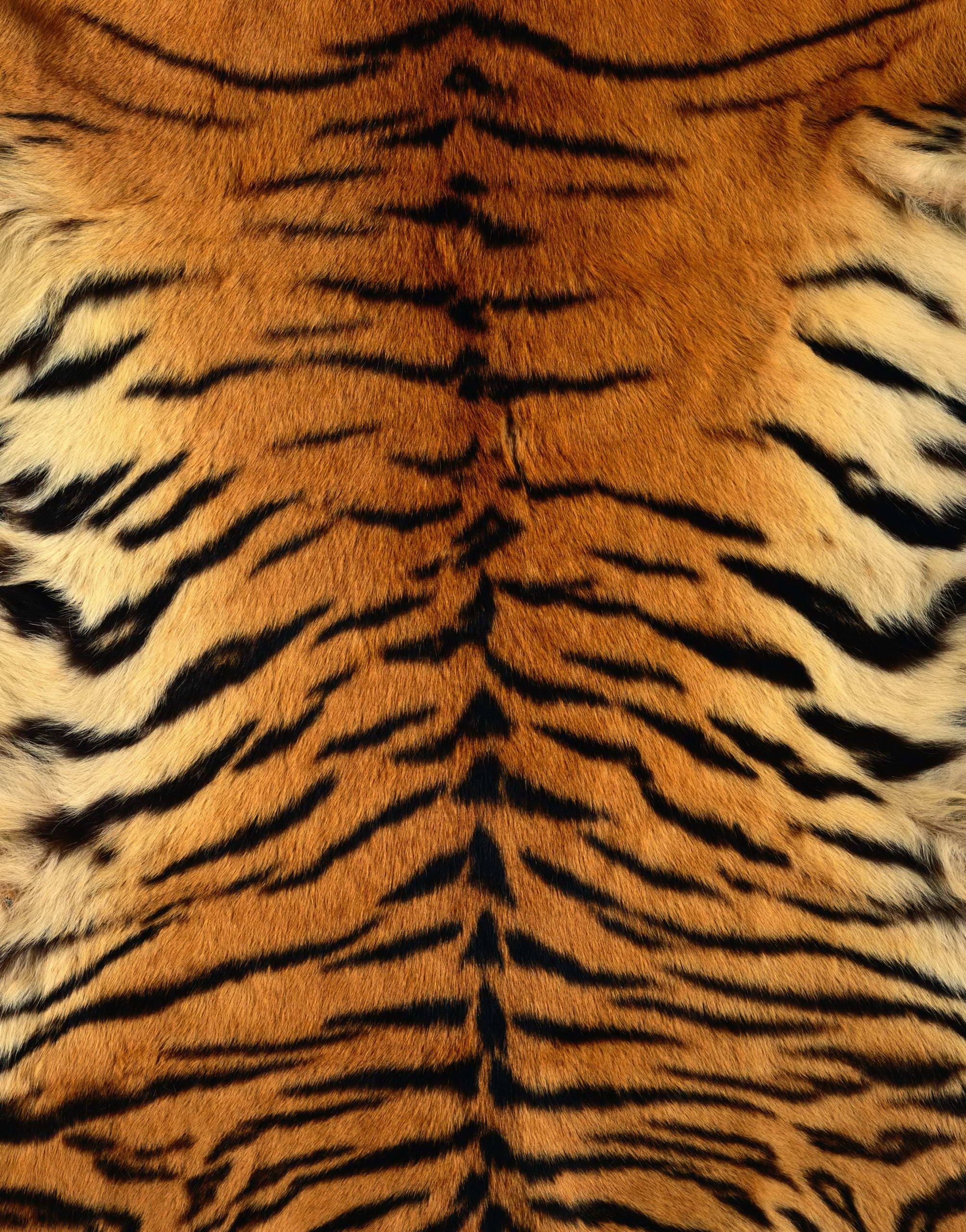 , skin tiger , download photo, texture fur, tiger fur texture background, background