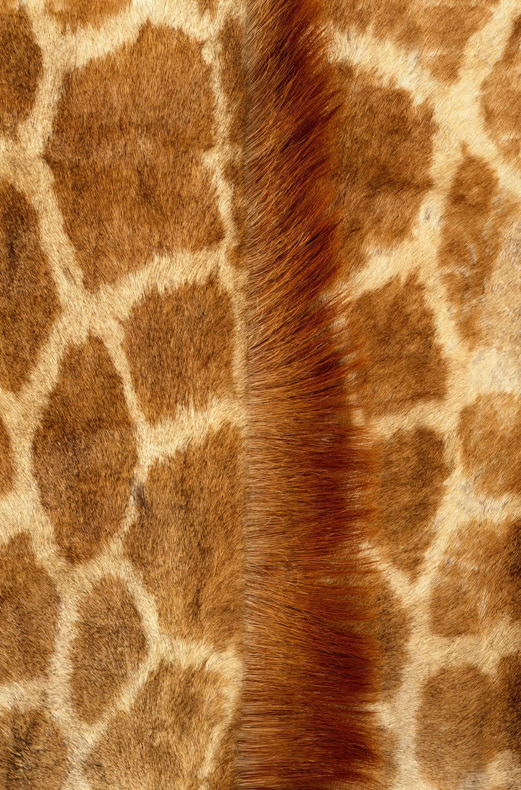 , skin giraffe, texture fur, fur texture background, background