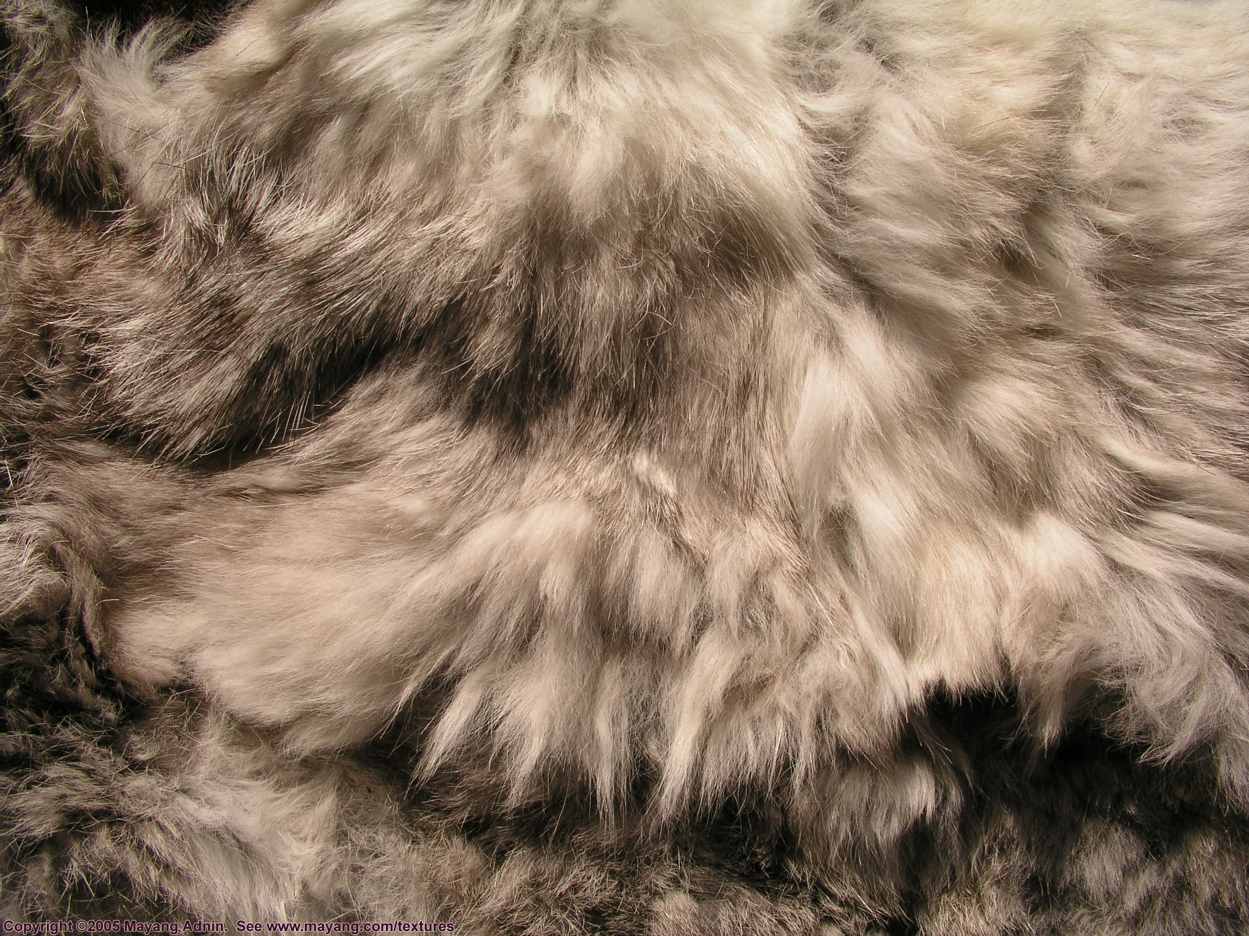 , skin, texture fur, wolf fur texture background, background