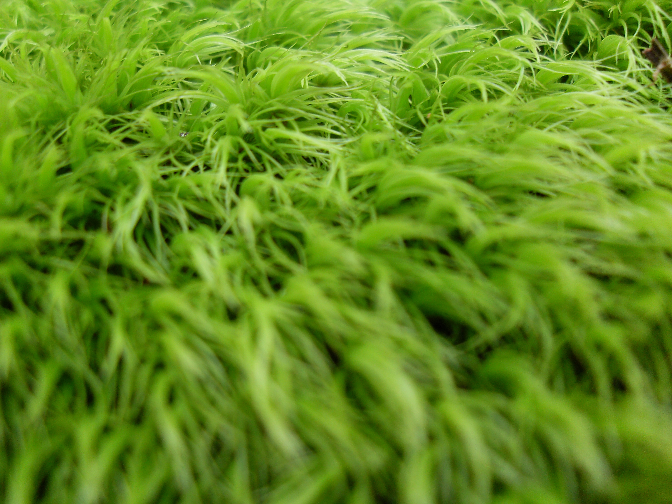 green grass, background, texture, download photo, green grass texture