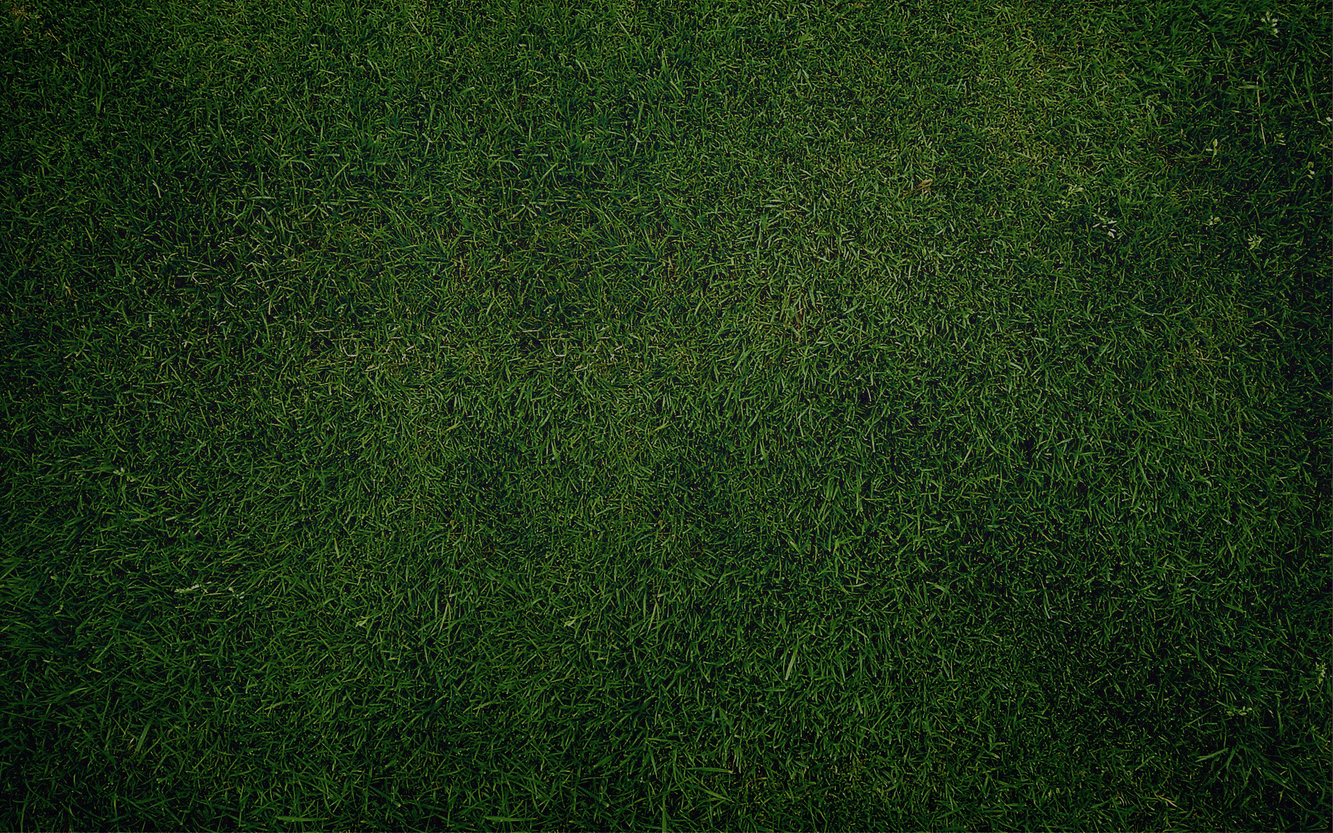 green grass, texture, background, download