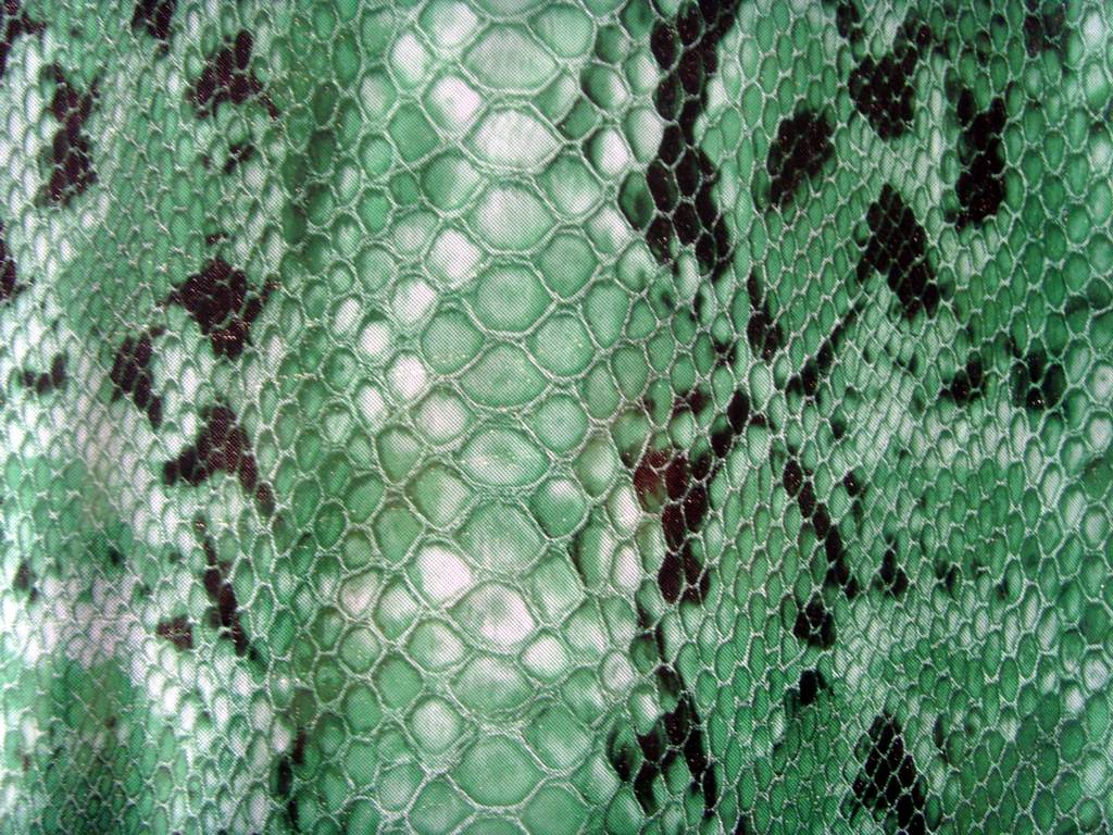 snake Thistle leather, texture, background, snake leather background, leather background