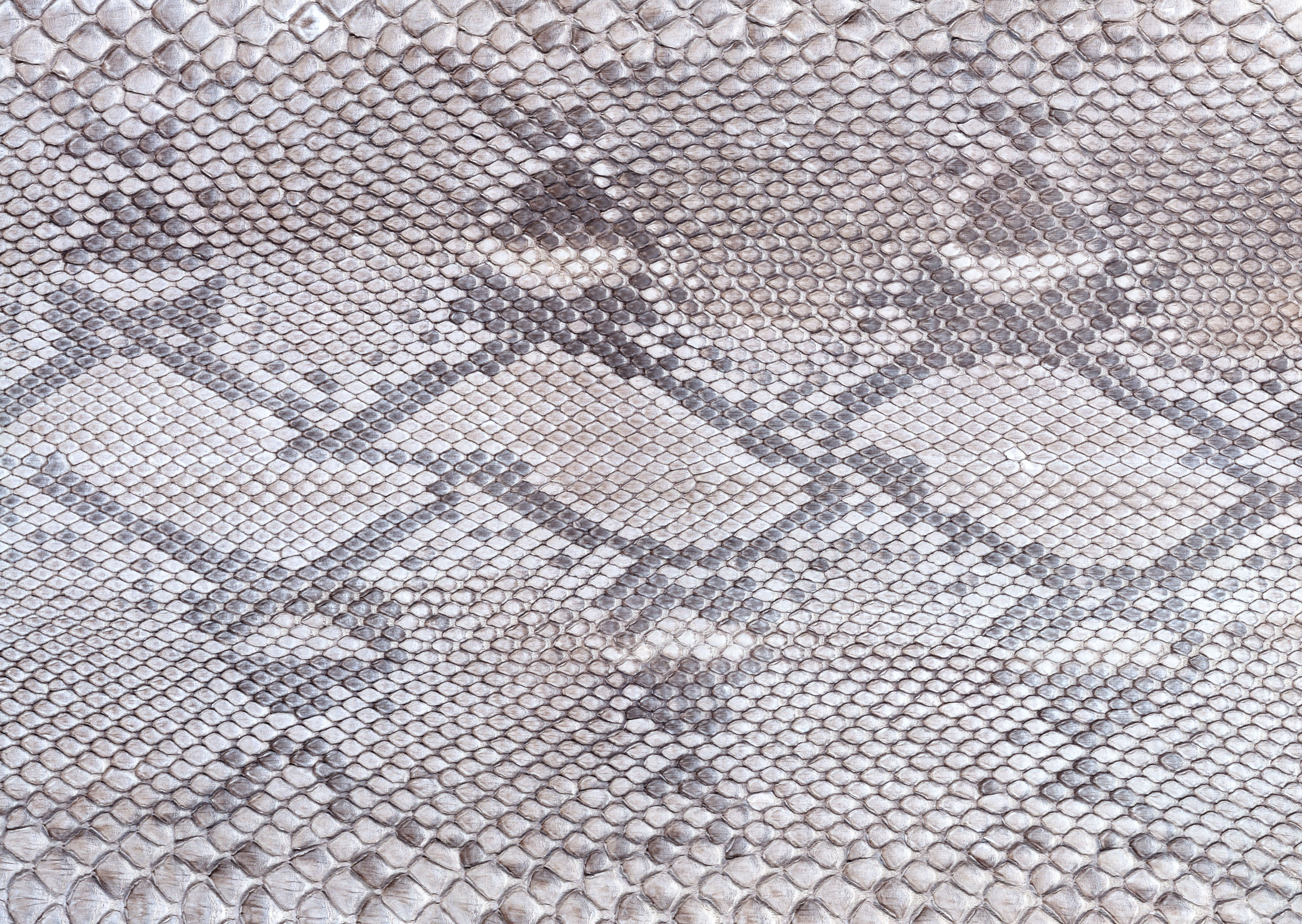 Gray snake leather texture background image download, snakes