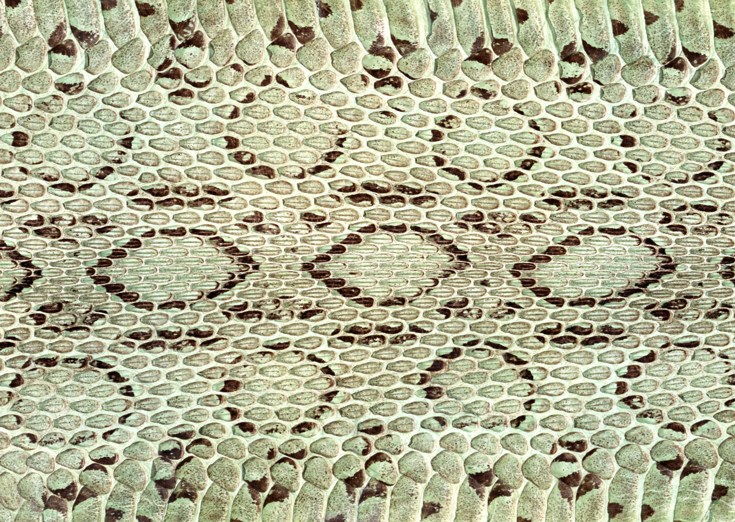 Snake leather texture background image download, snakes