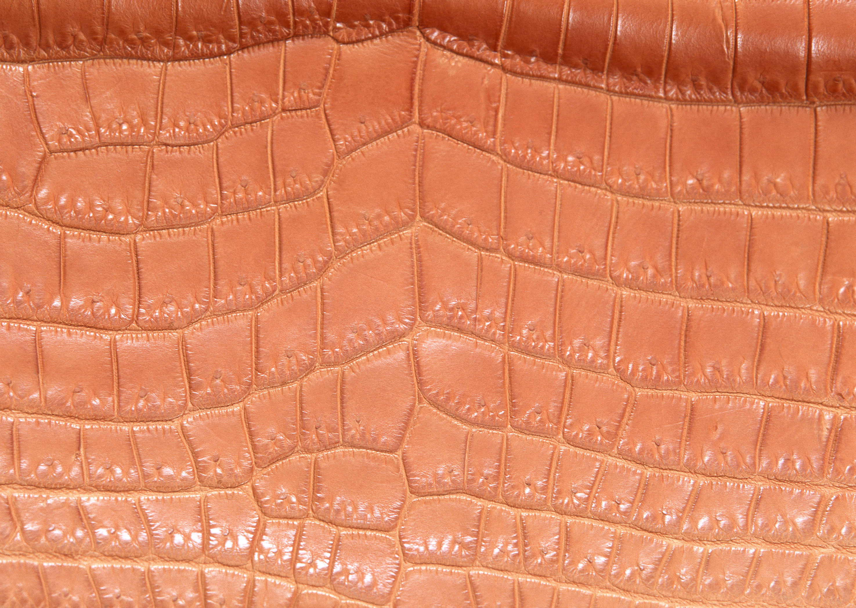 Brown snake leather texture background image download, snakes