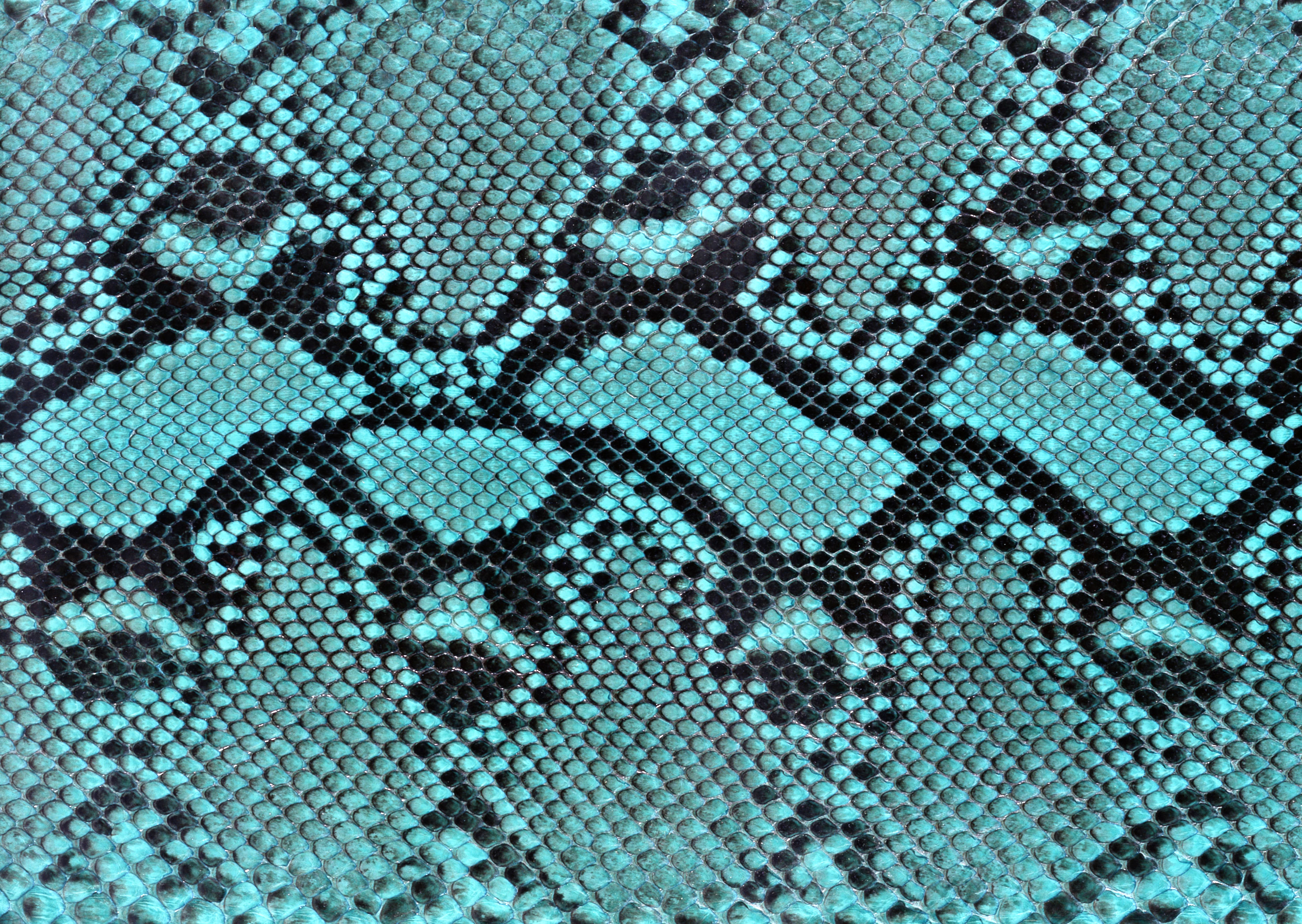 Snake leather texture background image