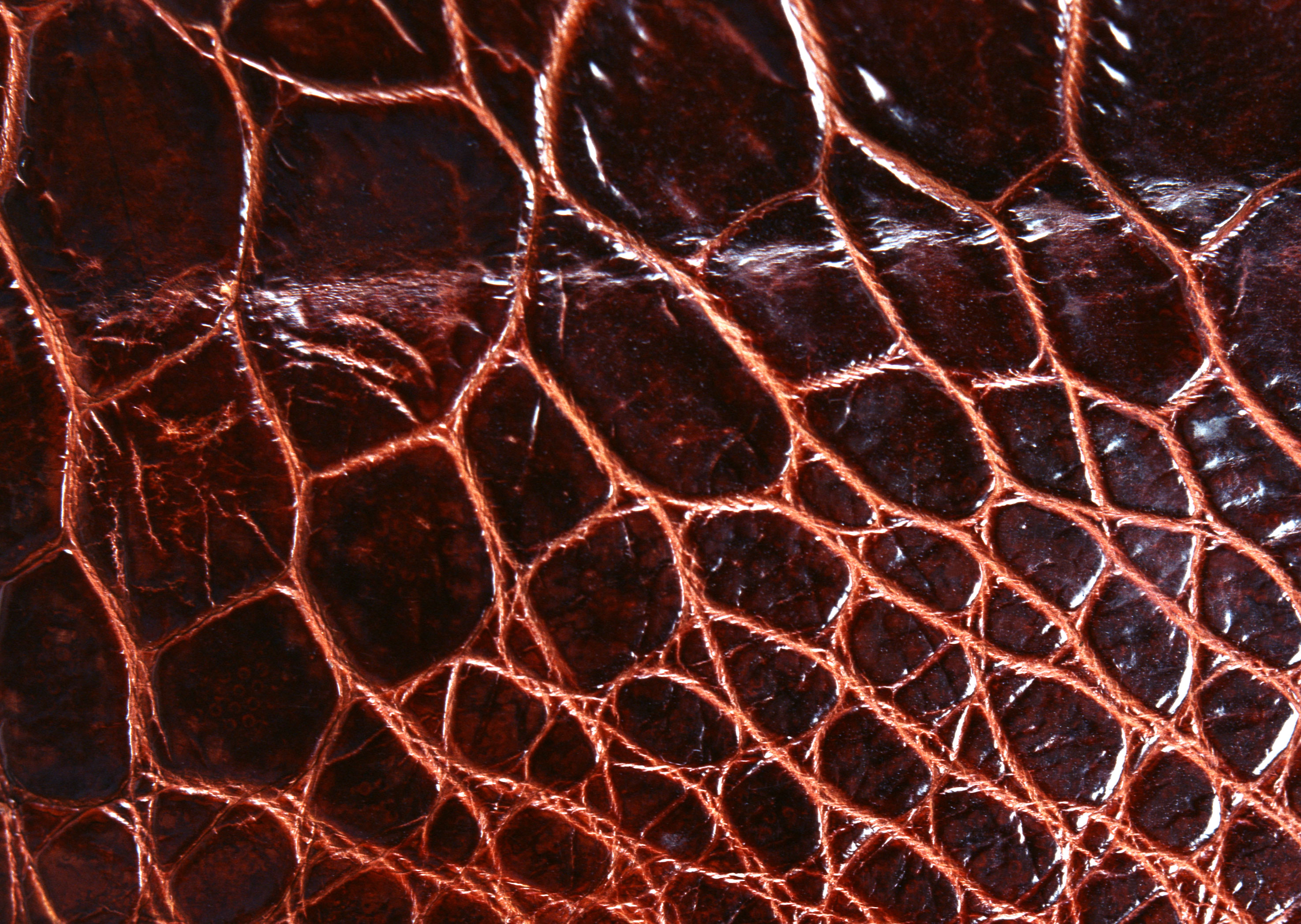 Crocodile leather texture background