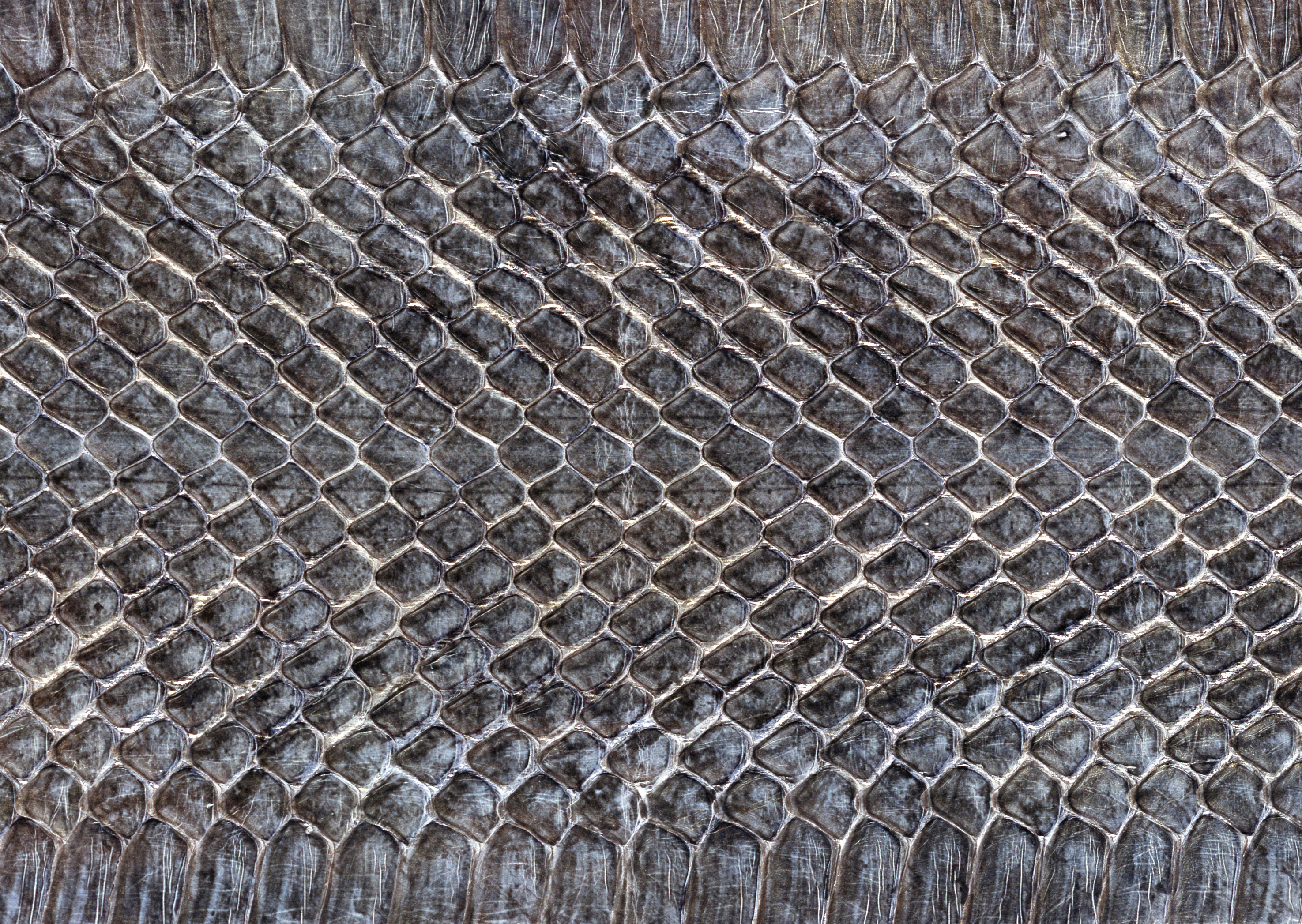 Snake leather texture background