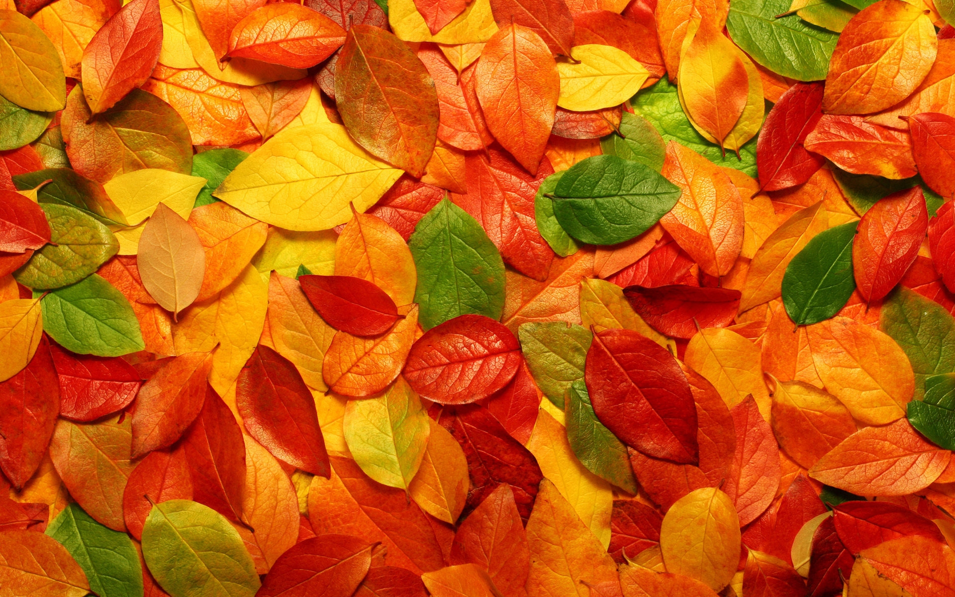 leaves, autumn, leaf fall, texture, download photo