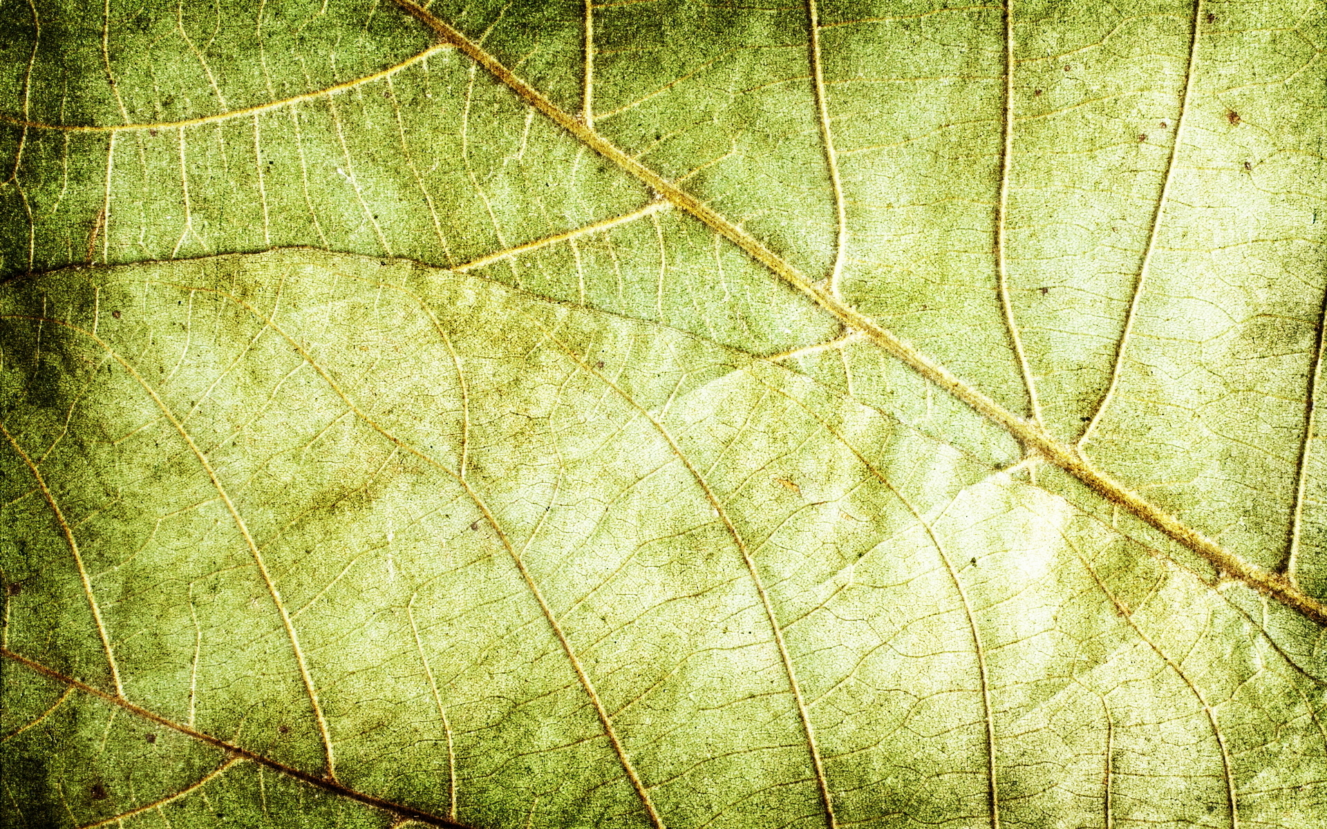 green dry leaves, download photo, background, texture