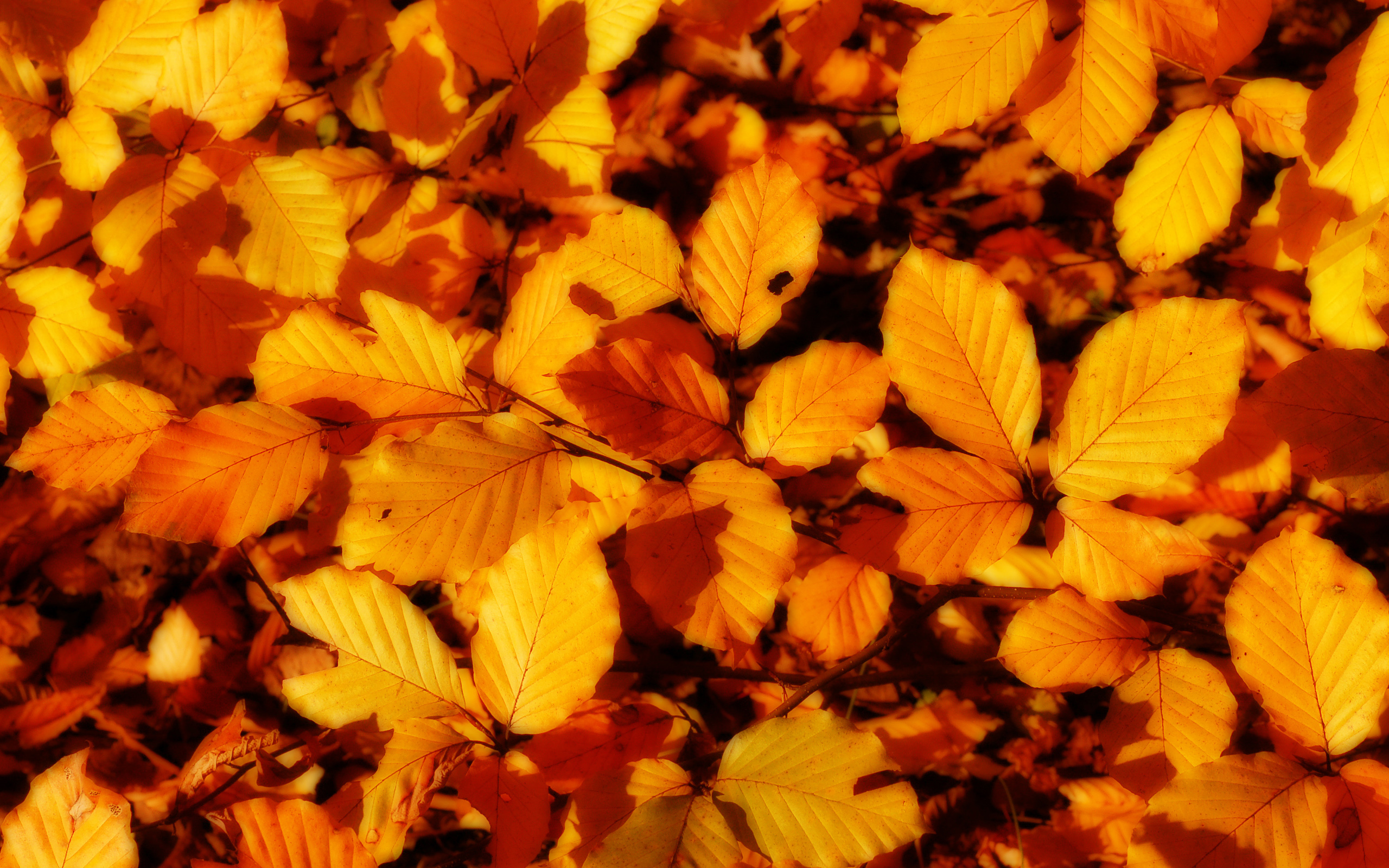 texture leaves, autumn, foliage, download photo, leaves texture