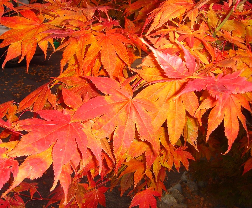 texture autumn, foliage, download photo, leaves texture