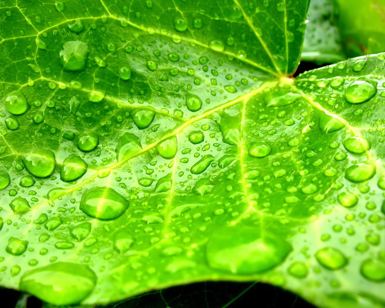 droplets on leaves 4k - photo #36