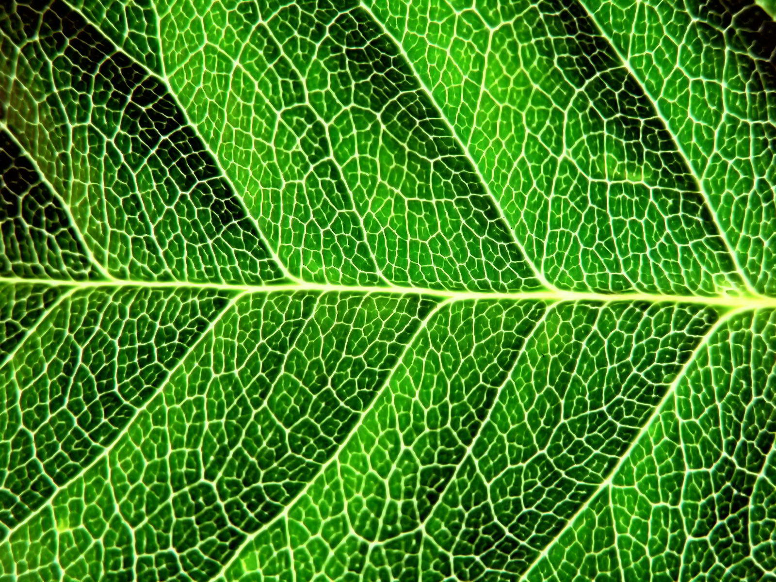 green leaf, download photo, texture, green leave texture, background