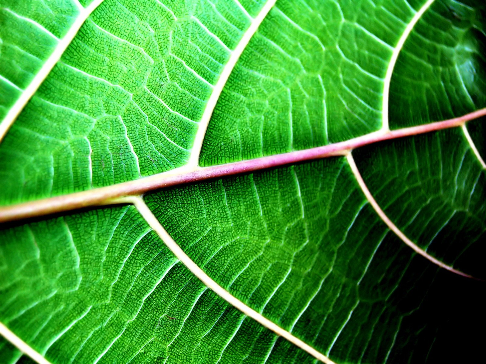green leaf, download photo, texture, green leaves texture, background