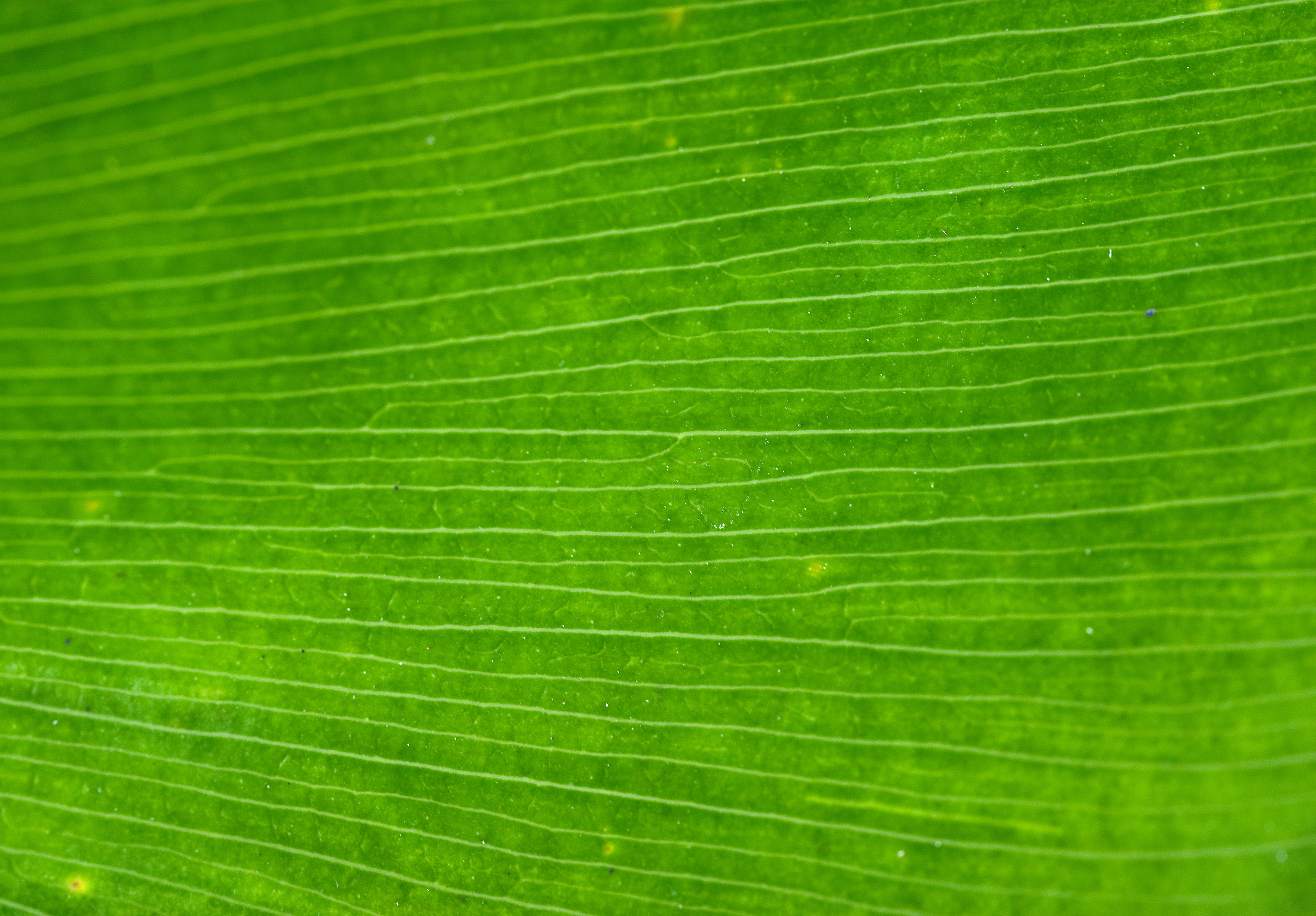 leaf green, texture, photo, background, download, green leaf texture