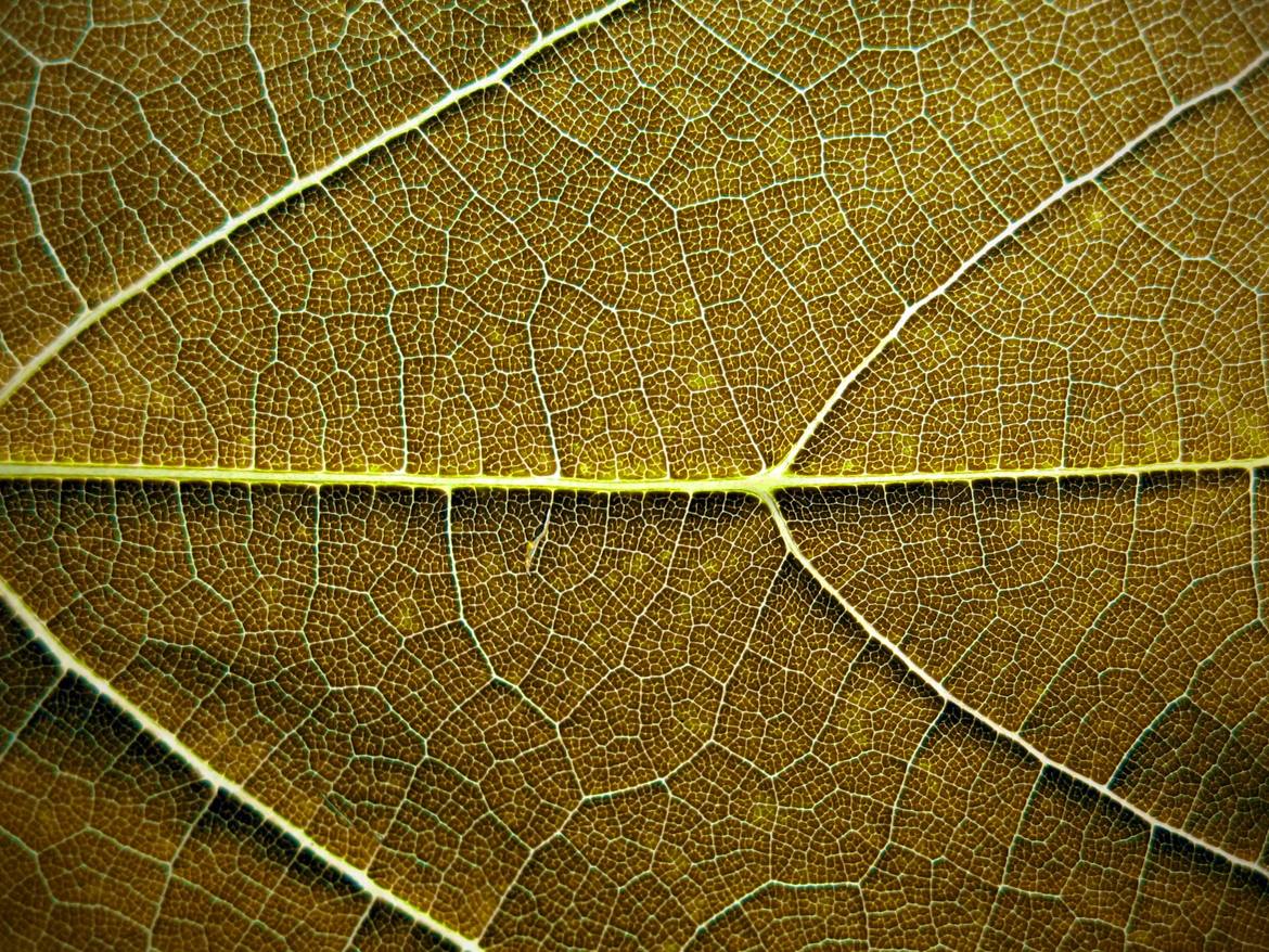 brown leaf texture background image