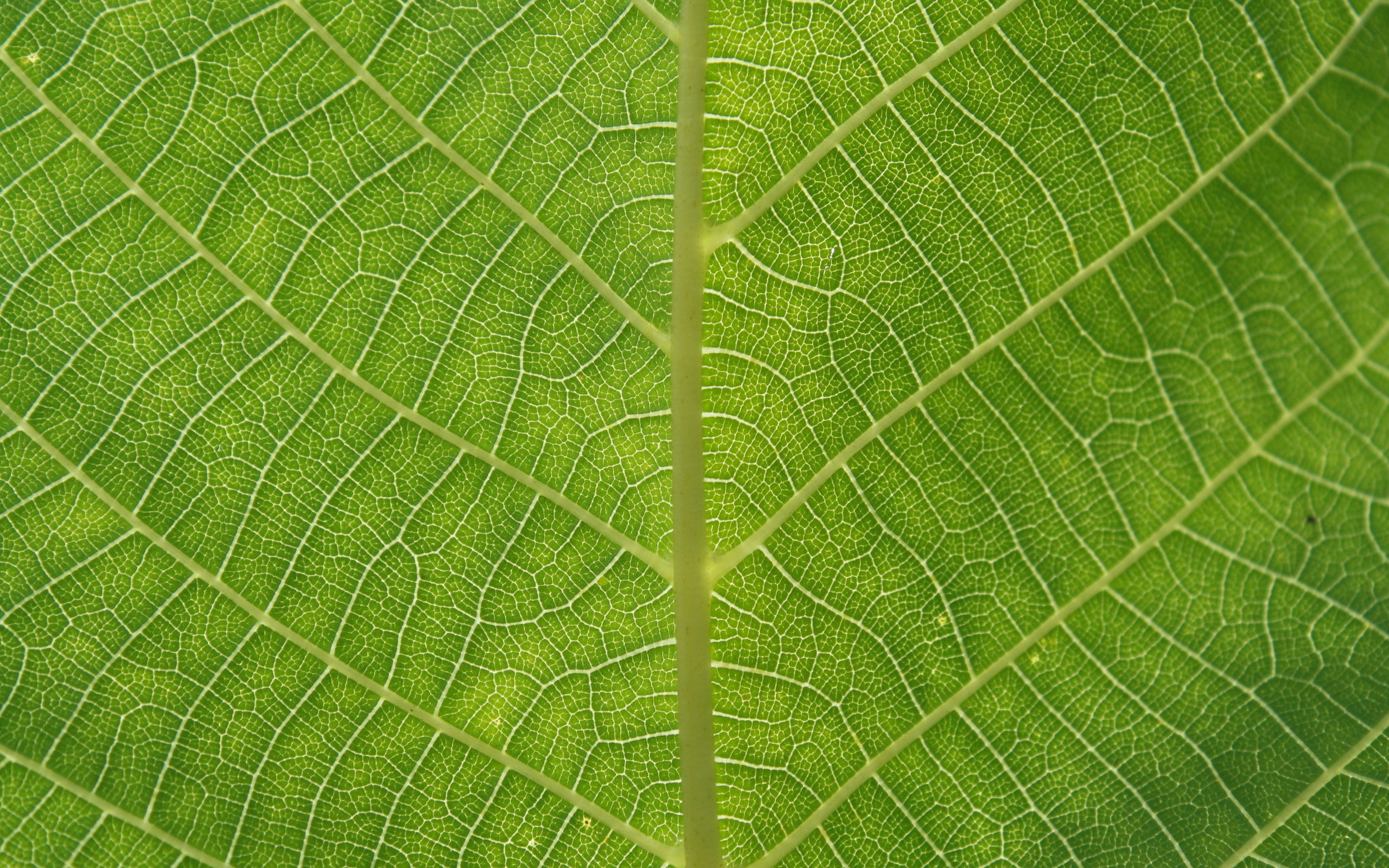 green leaf texture background image