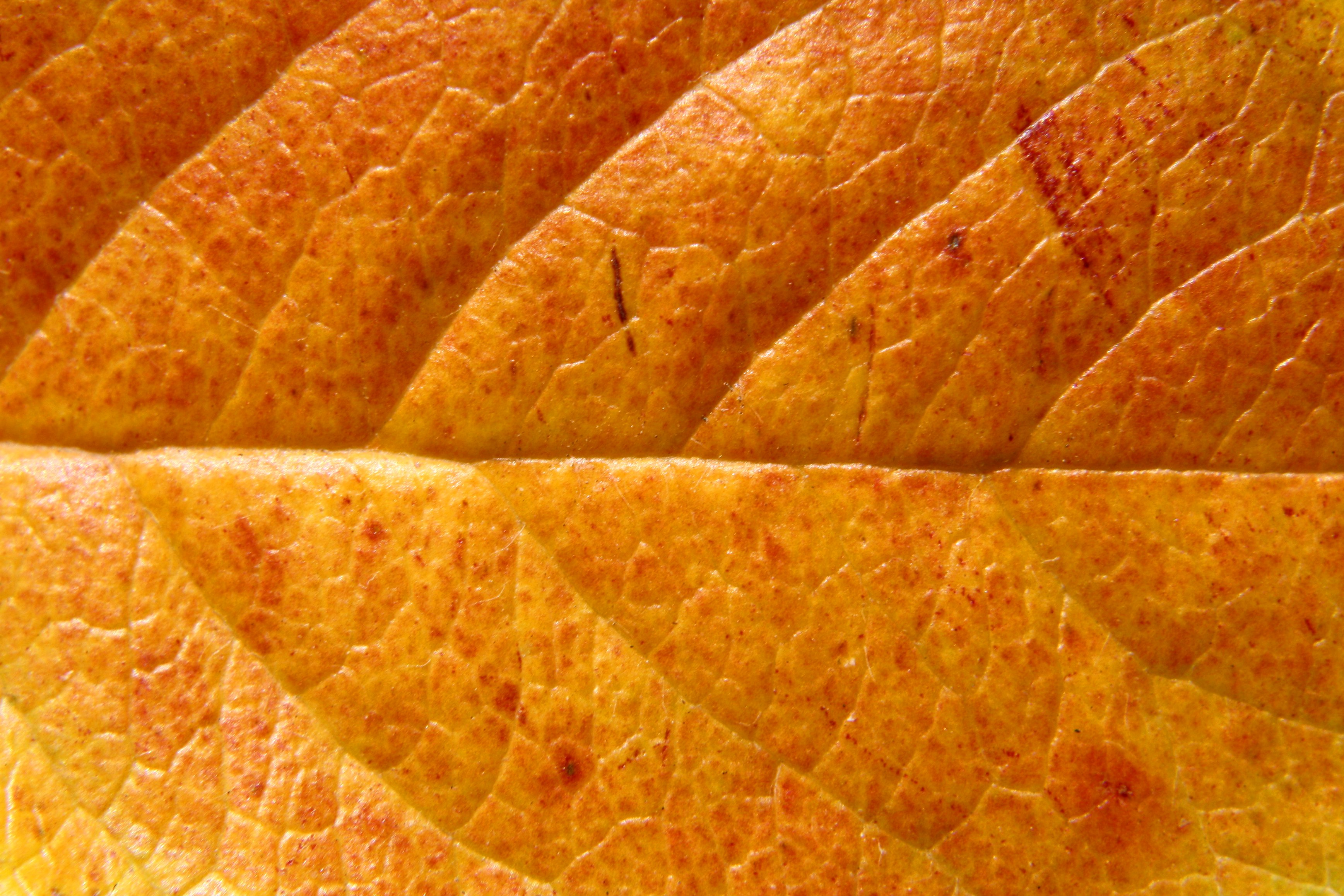 autumn leaf texture background image