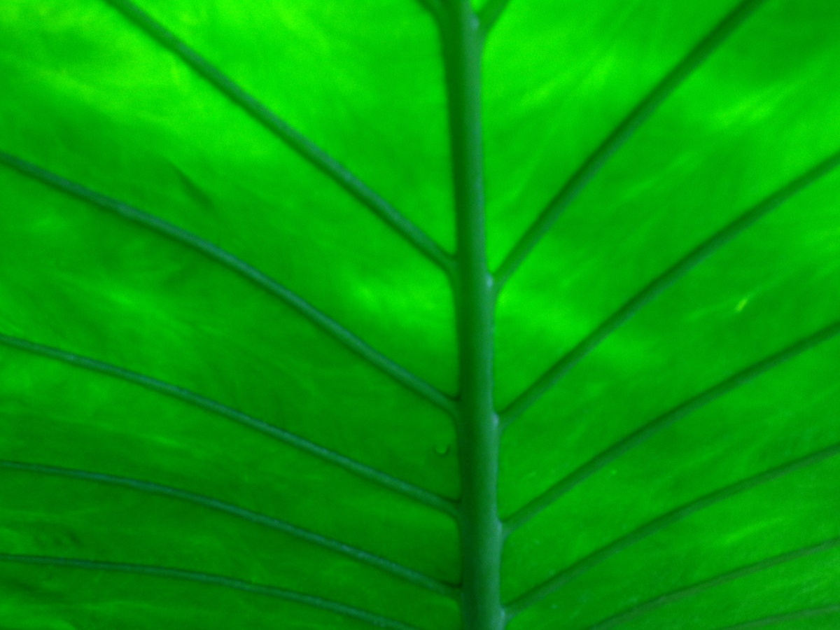 Green plants texture background