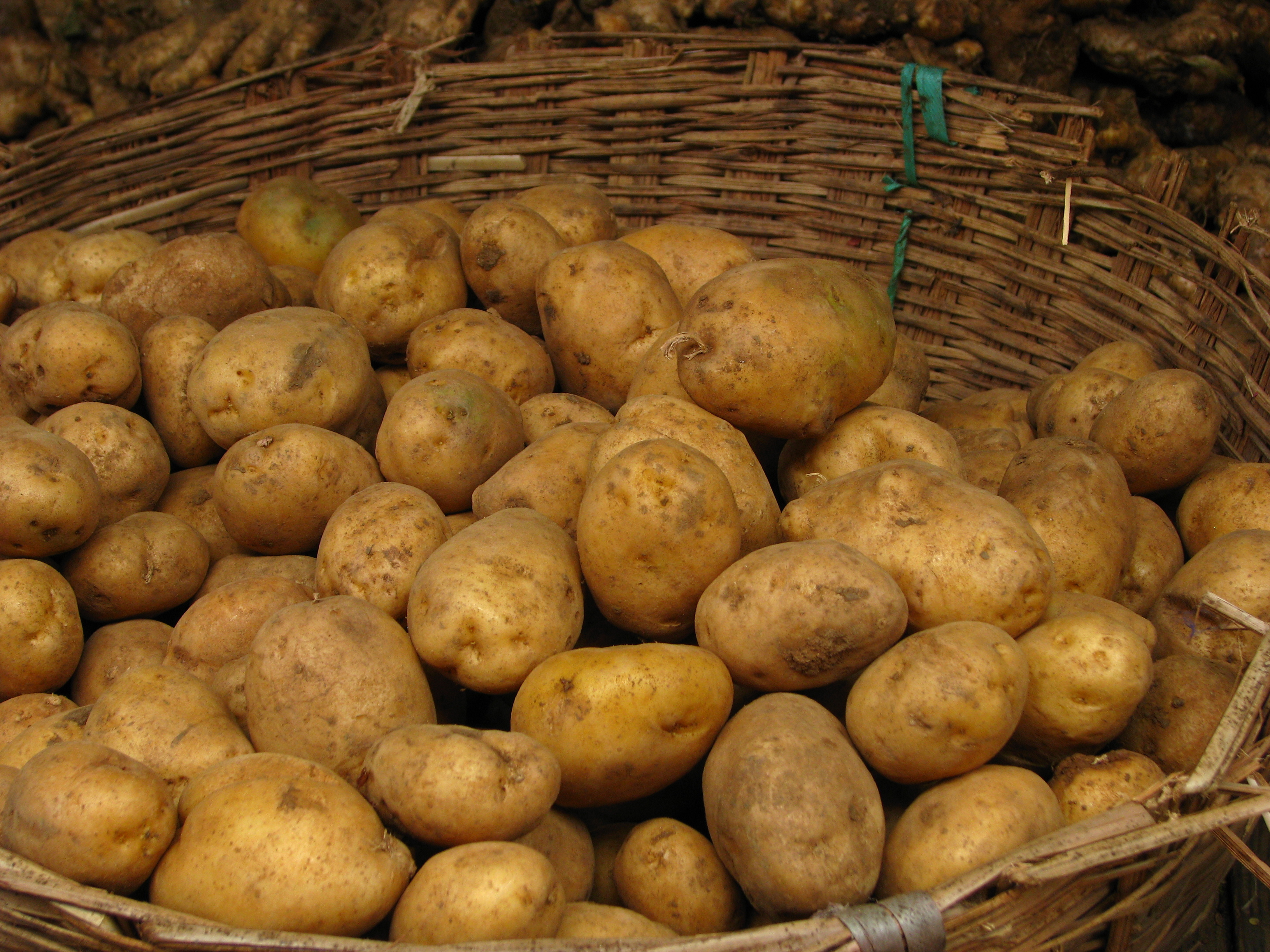 Potato texture background