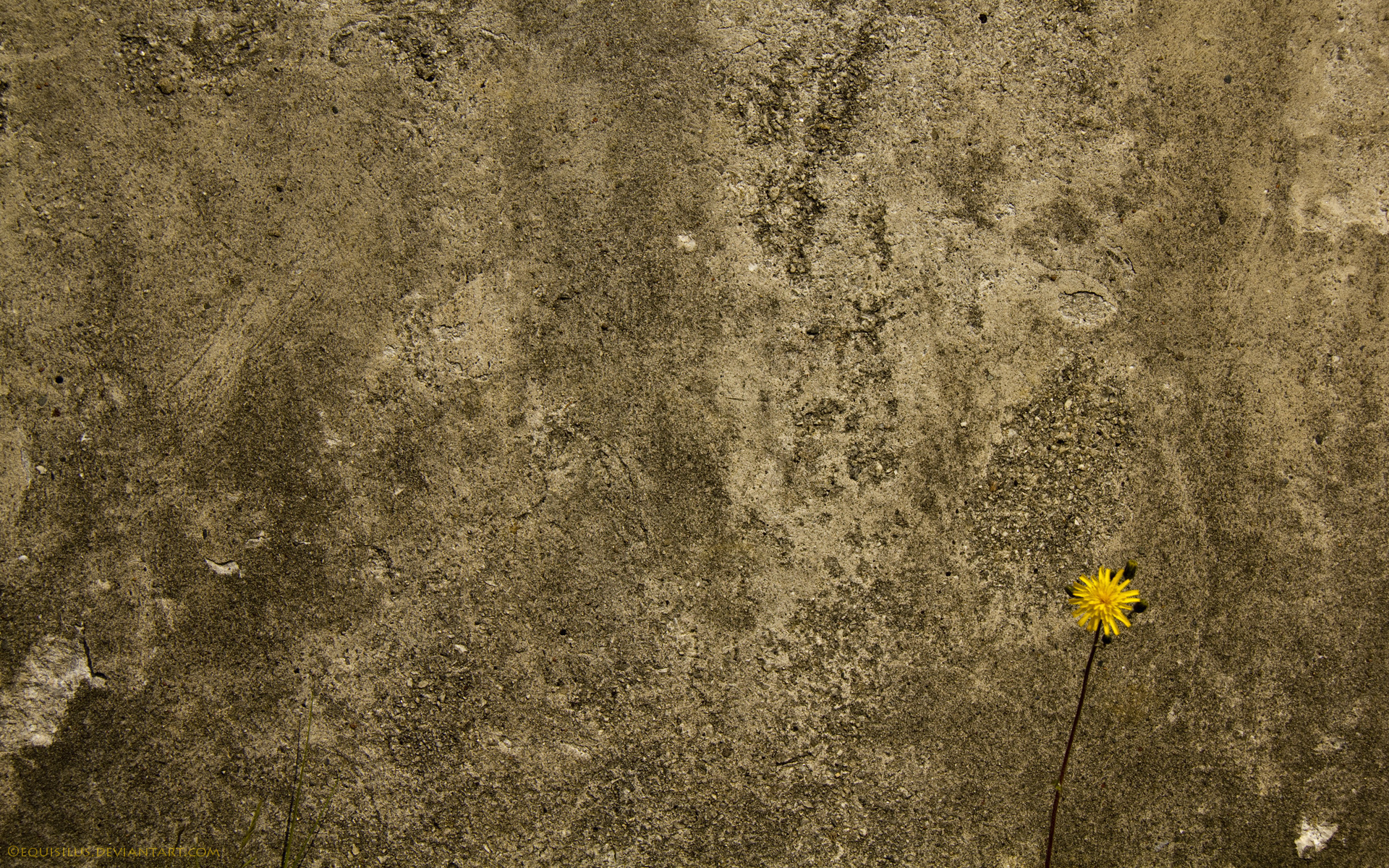 texture background, wall stone, stone , download photo