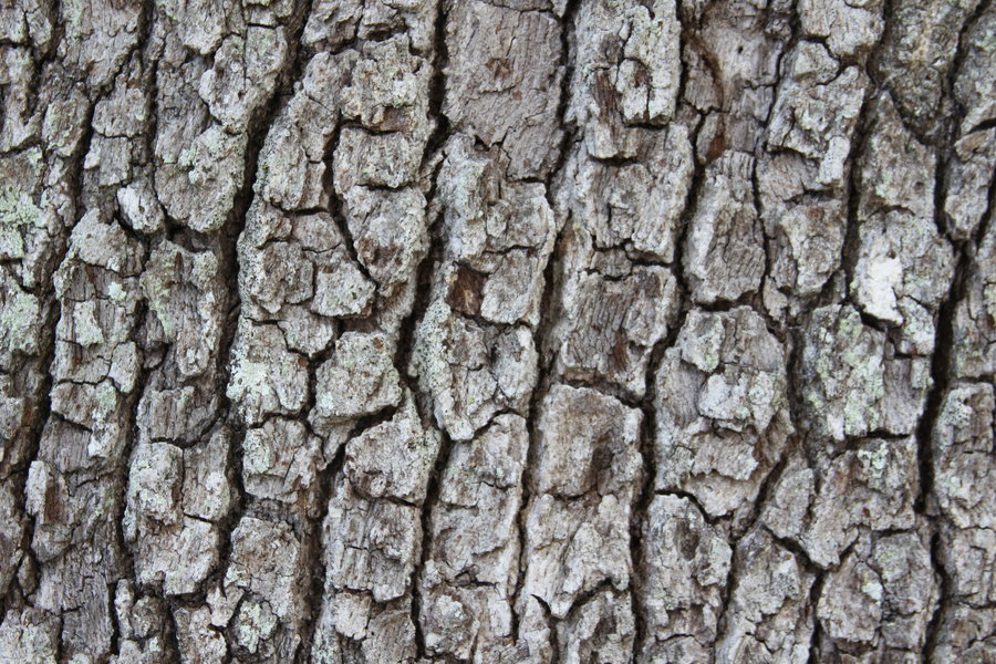 Tree texture background