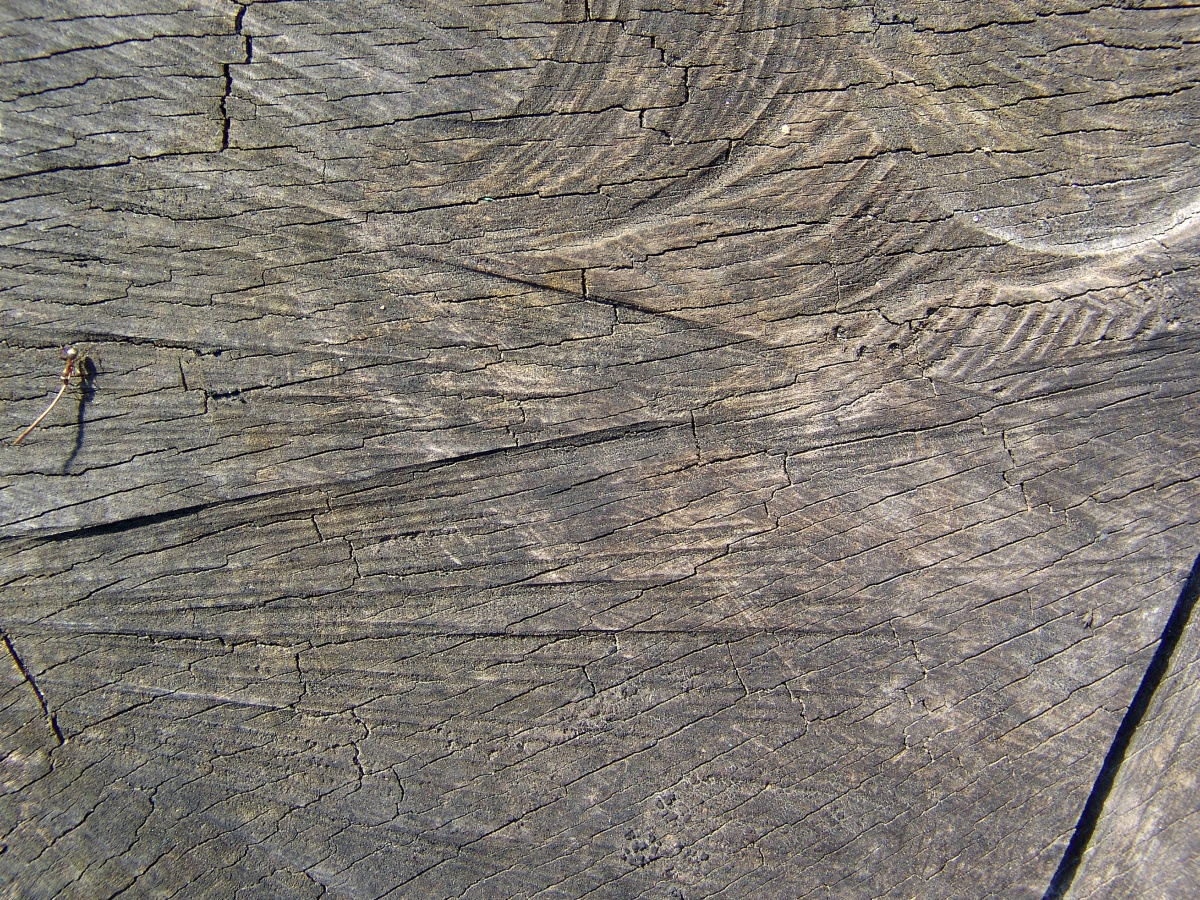 texture wood, old tree wood, photo, download