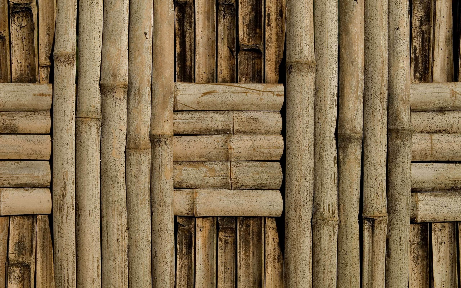 bamboo, download photo, tree wood, background, texture