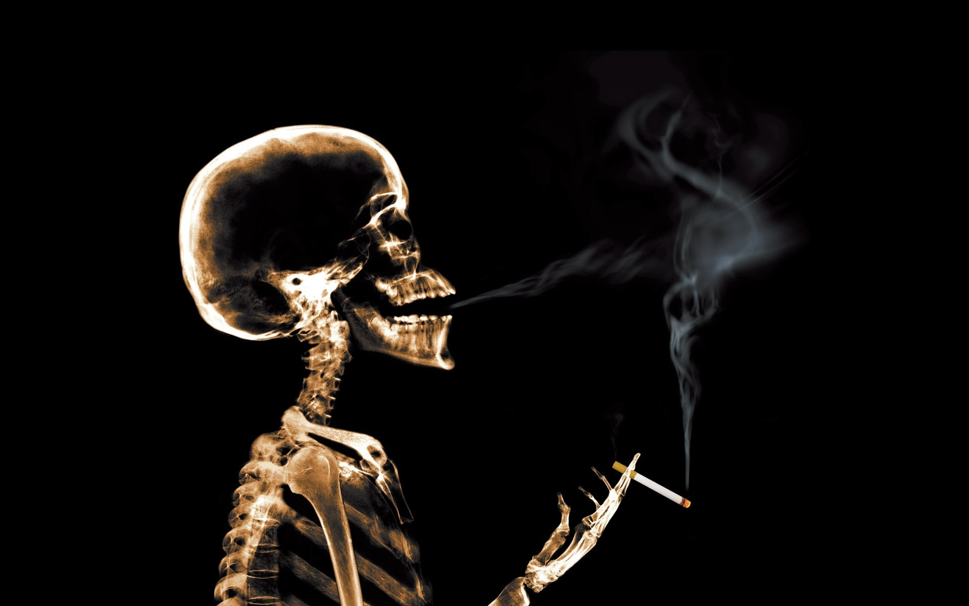 skull x-rays, texture, background, download photo, smoking head skull x-ray texture background