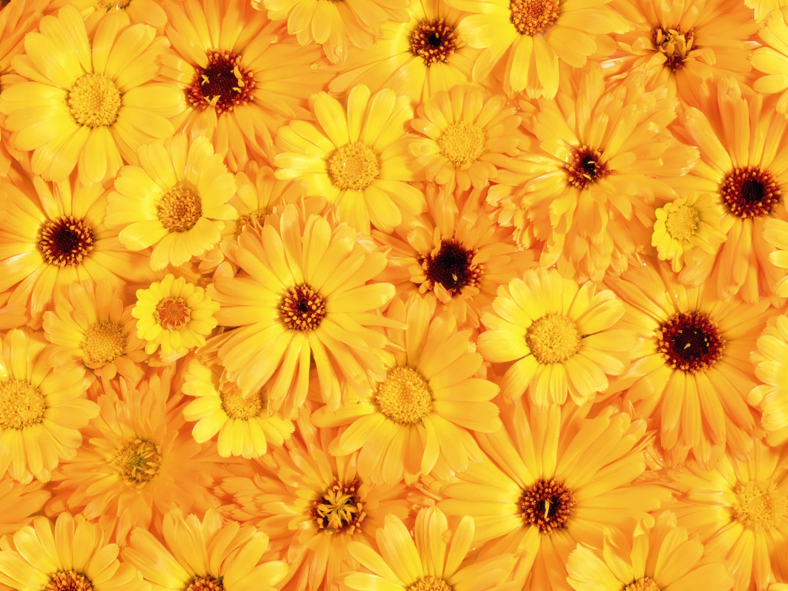 One Flower Clipart ... : yellow flowers, ...